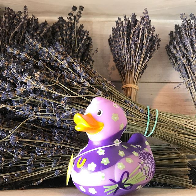 Next season 2020 we will be flying and walking in the lavander fields of Valansole South of France. Cone and buy us at the great museum.
