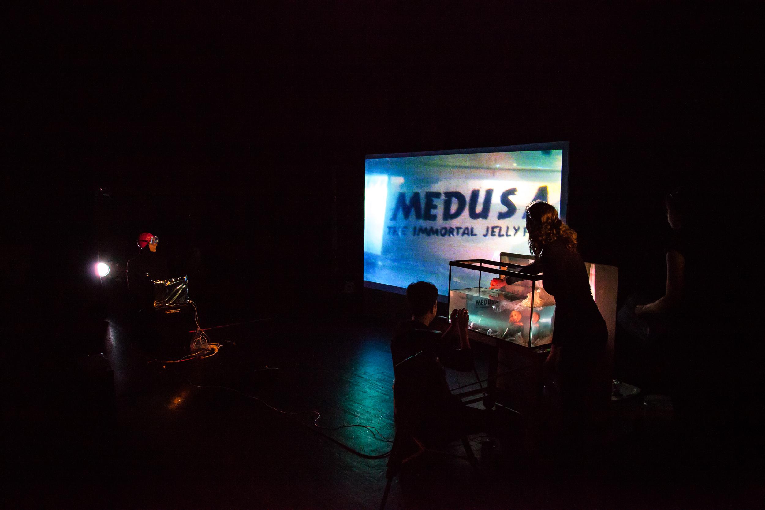 Medusa: The Immortal Jellyfish