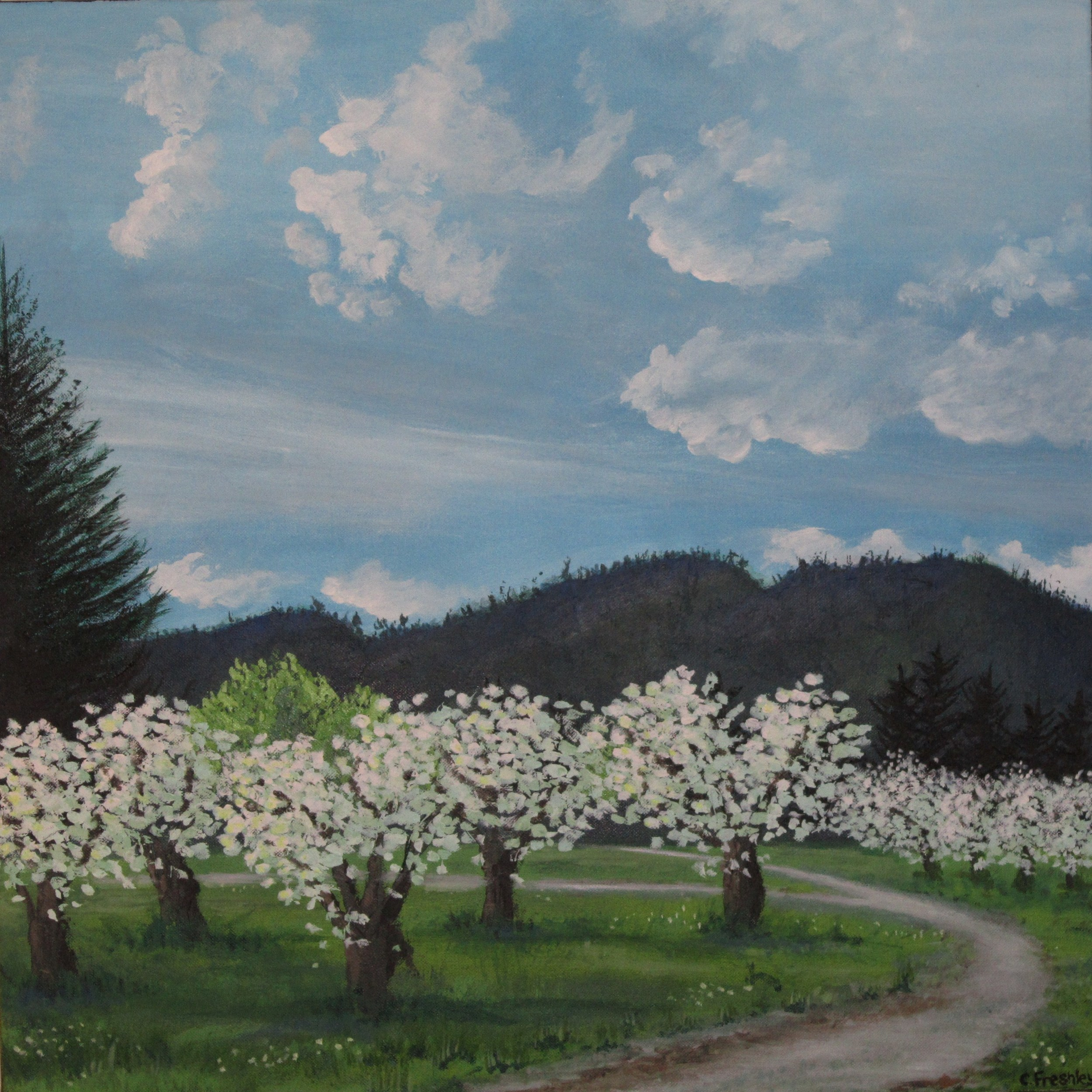 "Apple Trees in Wenatchee - 24""x24"" - SOLD"