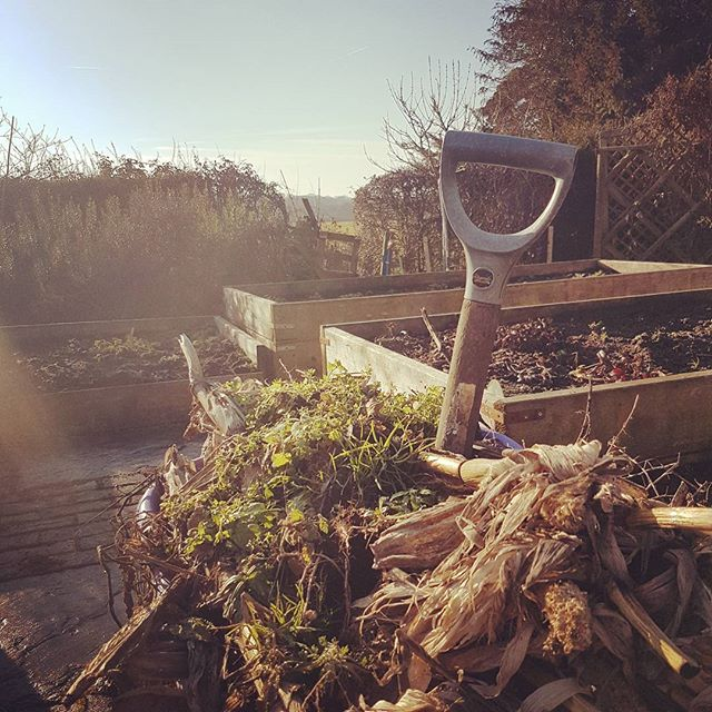 Winter warm sun and #allotment clearing is very 🍺 inducing work