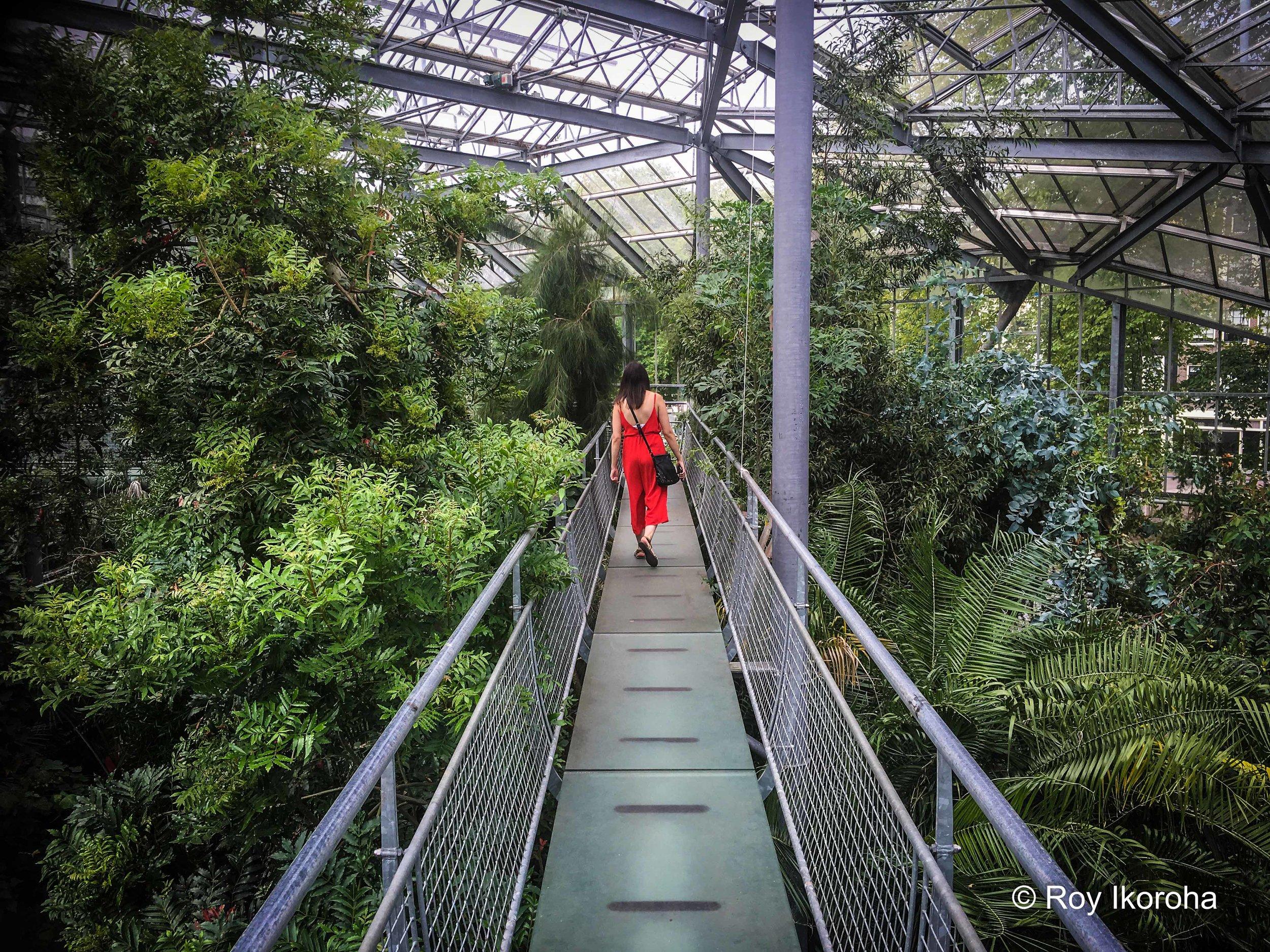 Hortus Botanicus, Amsterdam, Netherlands
