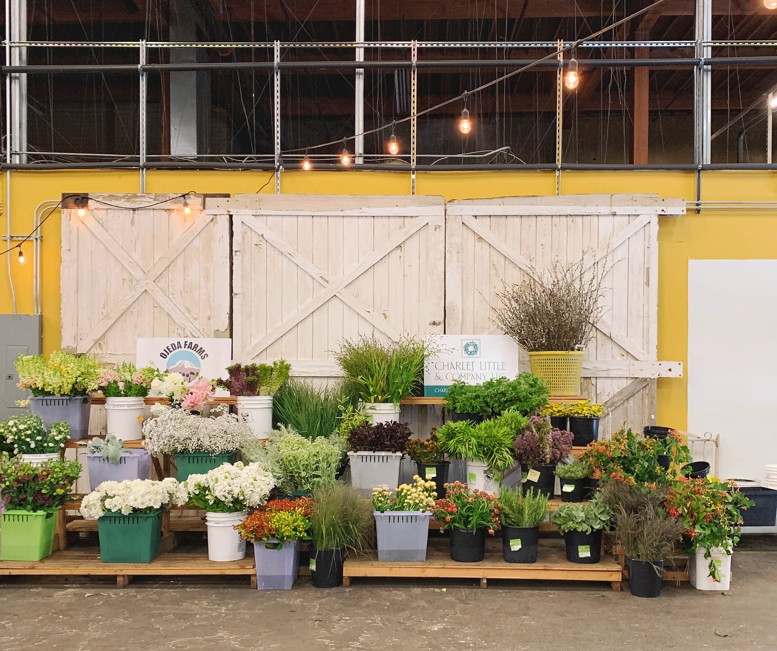 Seattle Wholesale Grower's Market / Photograph by Lauren L Caron © 2019