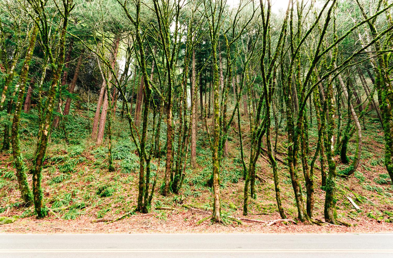 OregonLandscapePhoto-10.jpg