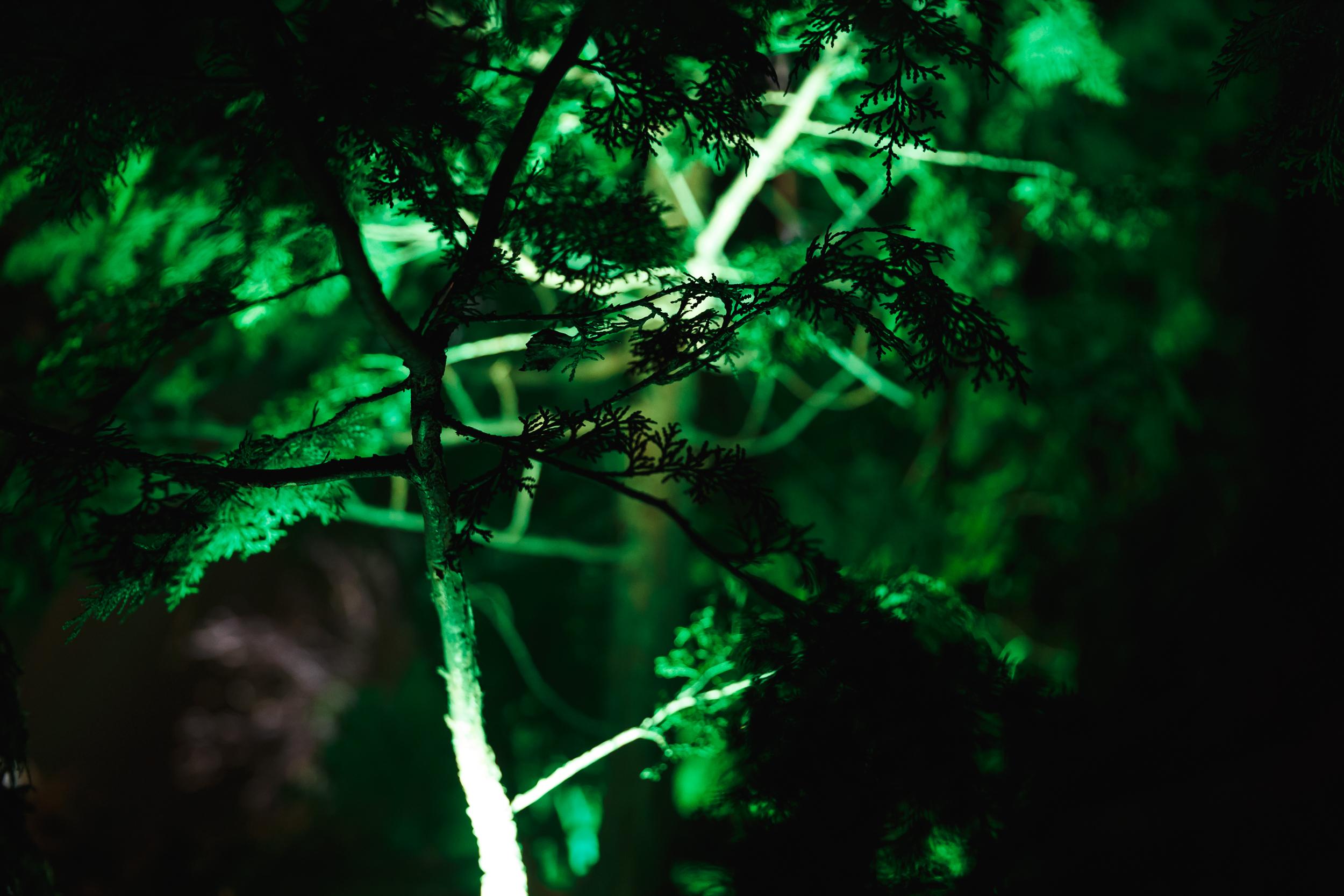 Keltic-Landing-photo8.jpg