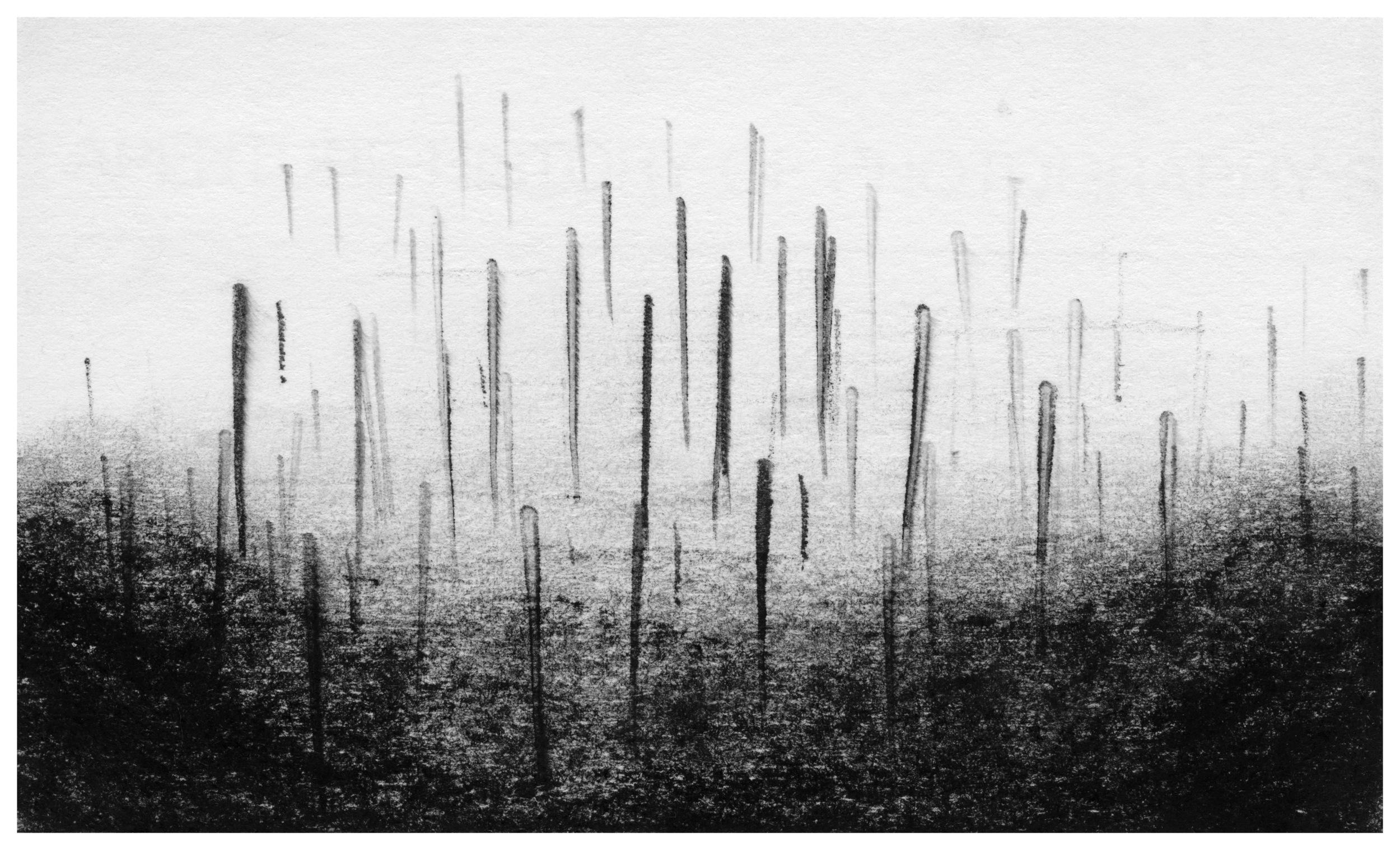 trees01_med.jpg