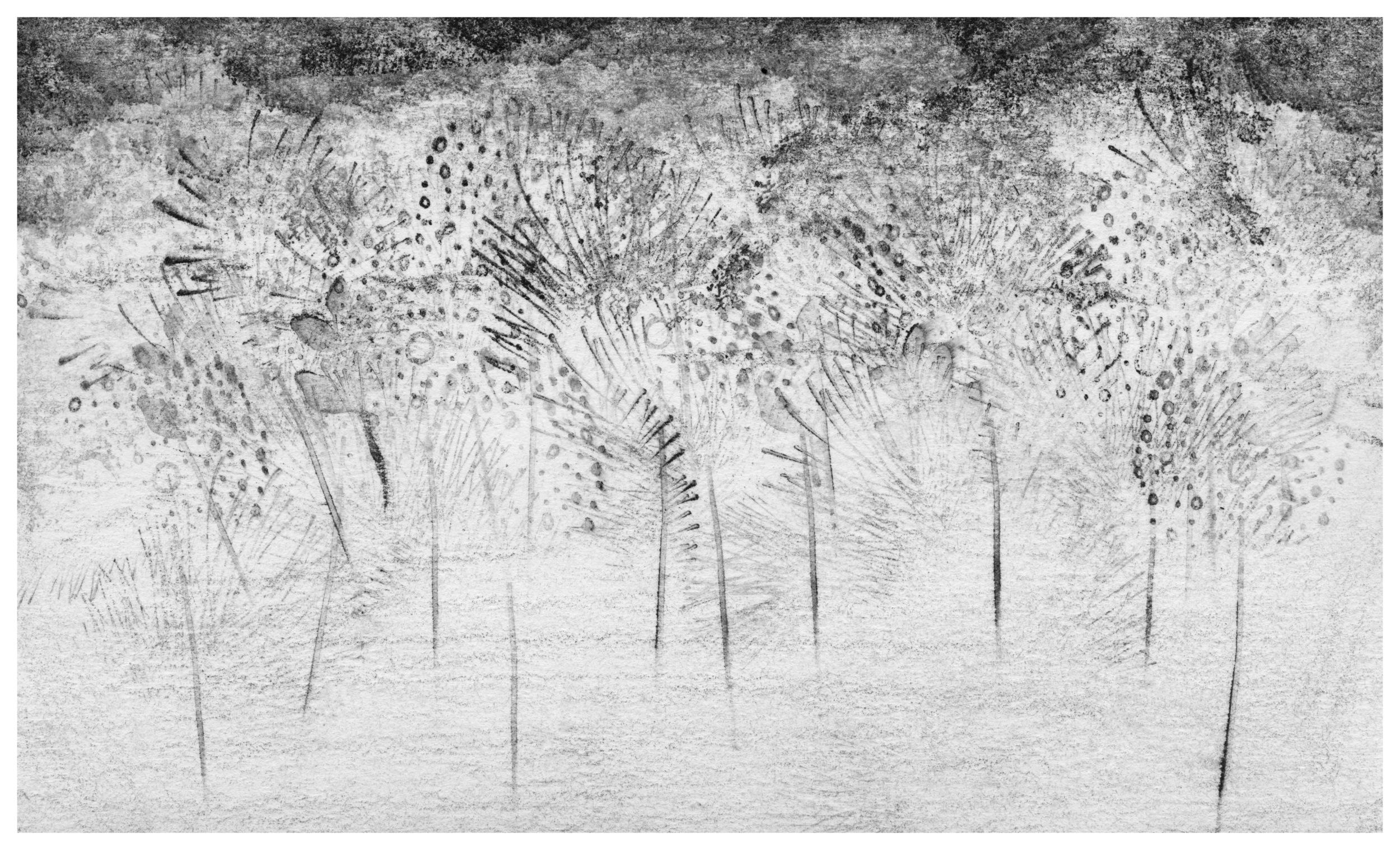trees02_med.jpg