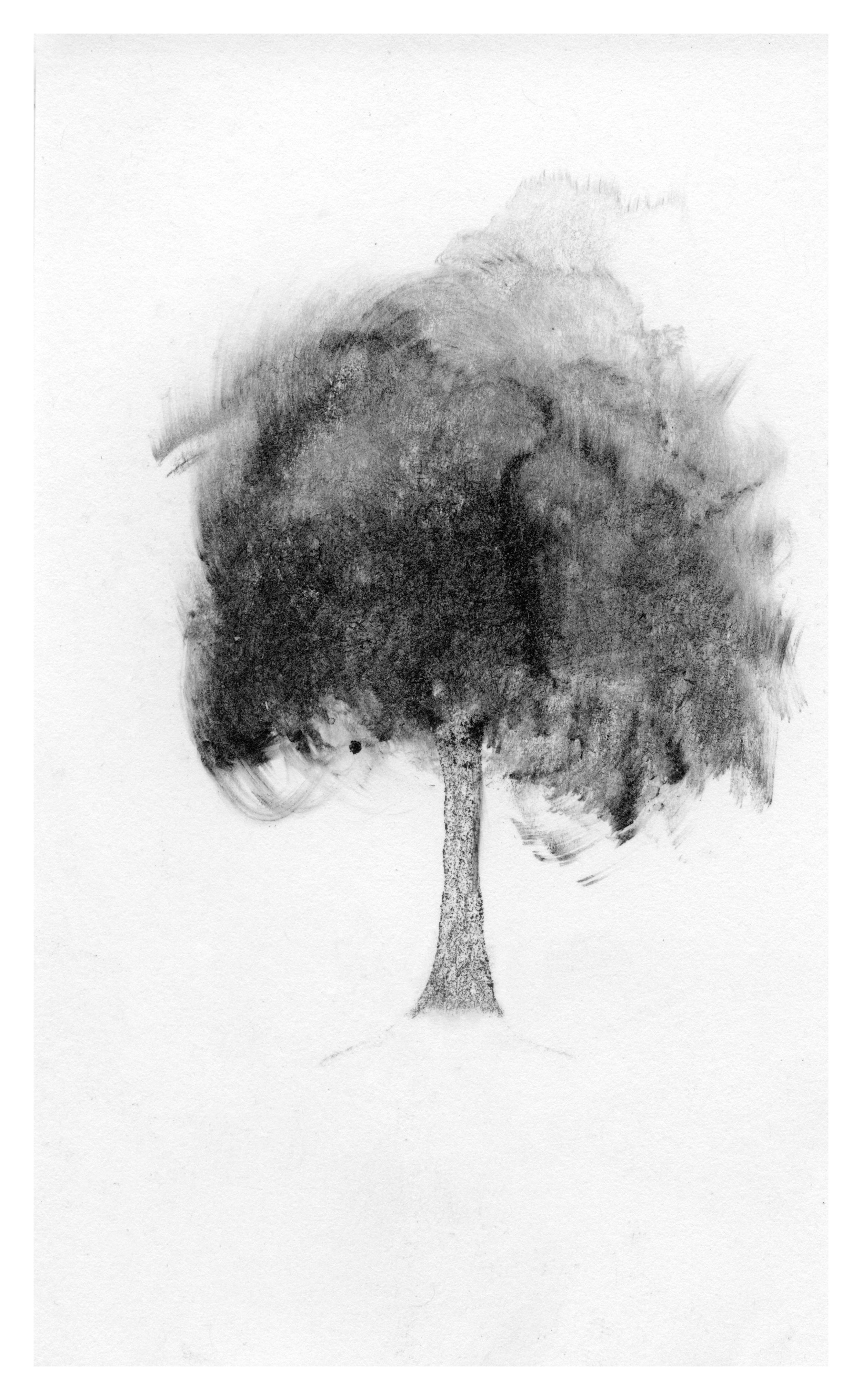 trees09.jpg