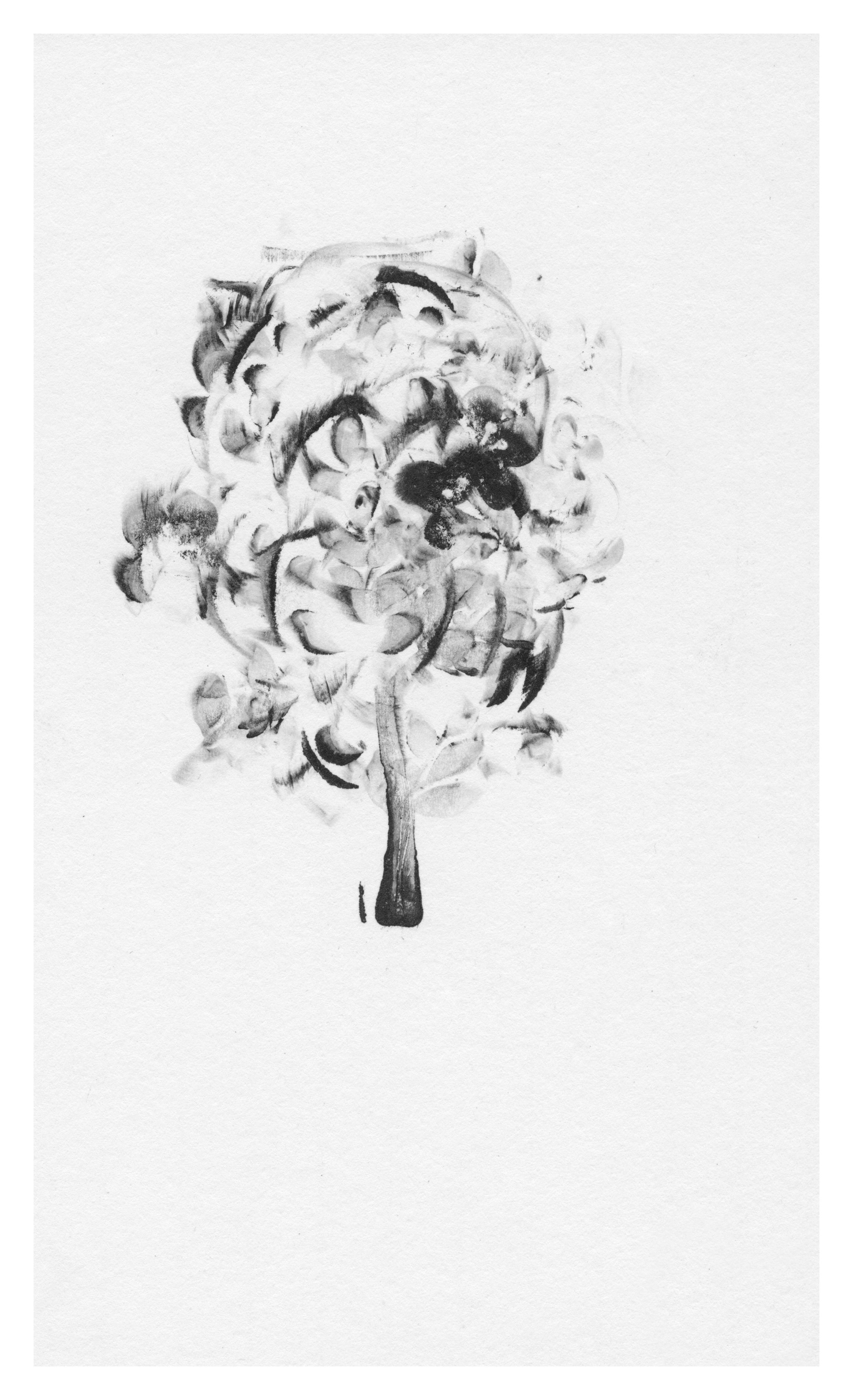 trees19.jpg