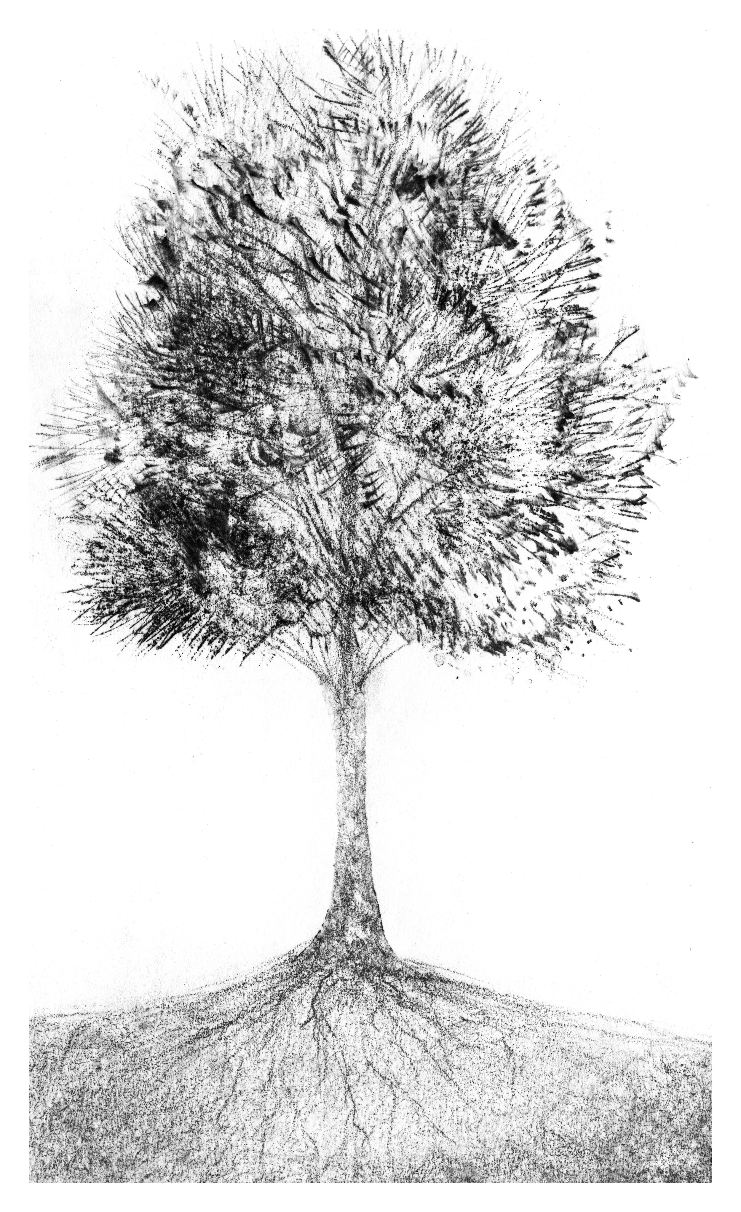 trees_white33.jpg