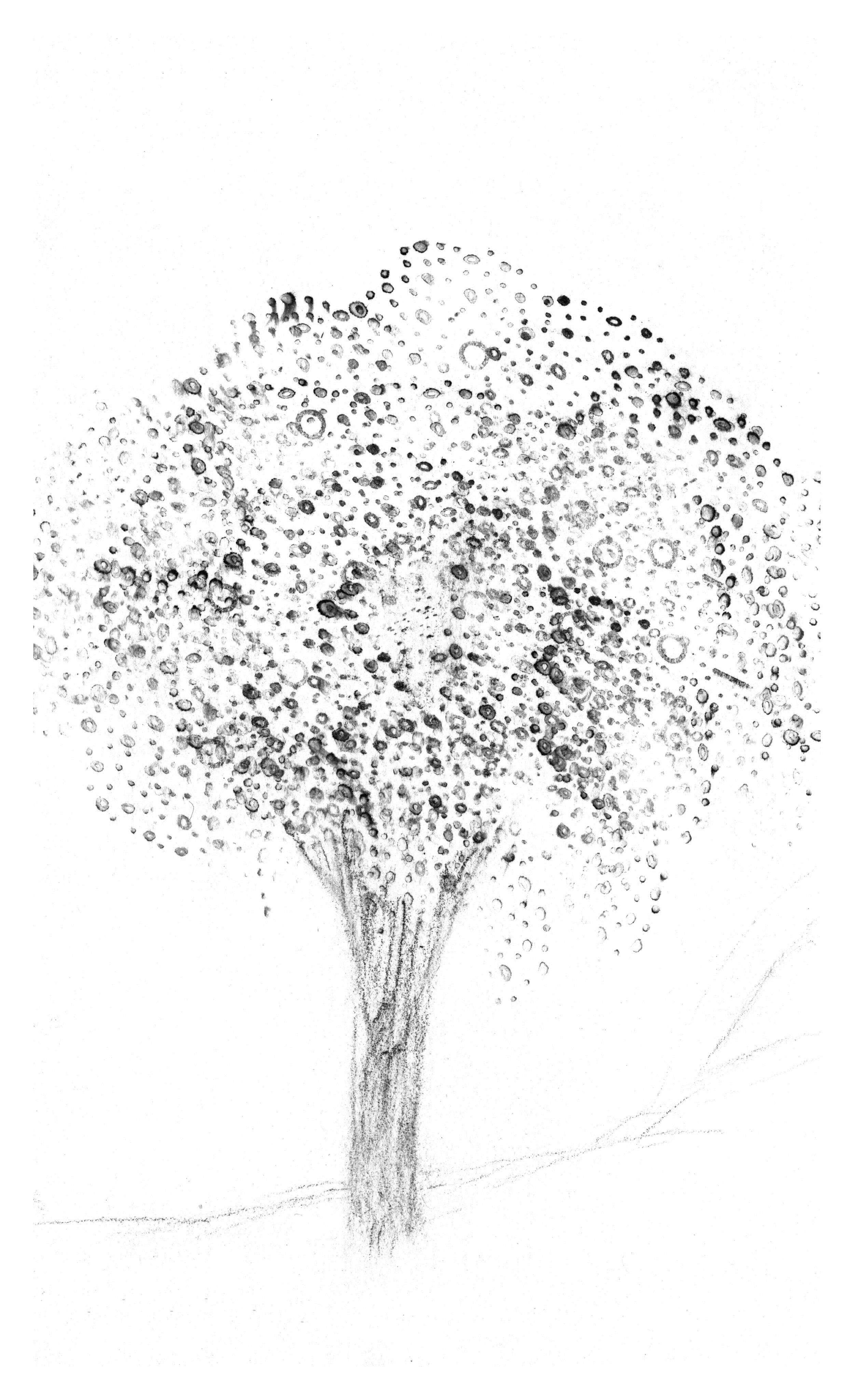 trees_white34.jpg