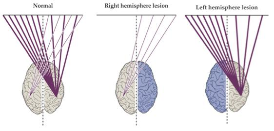 Example Of Brain To Body Function