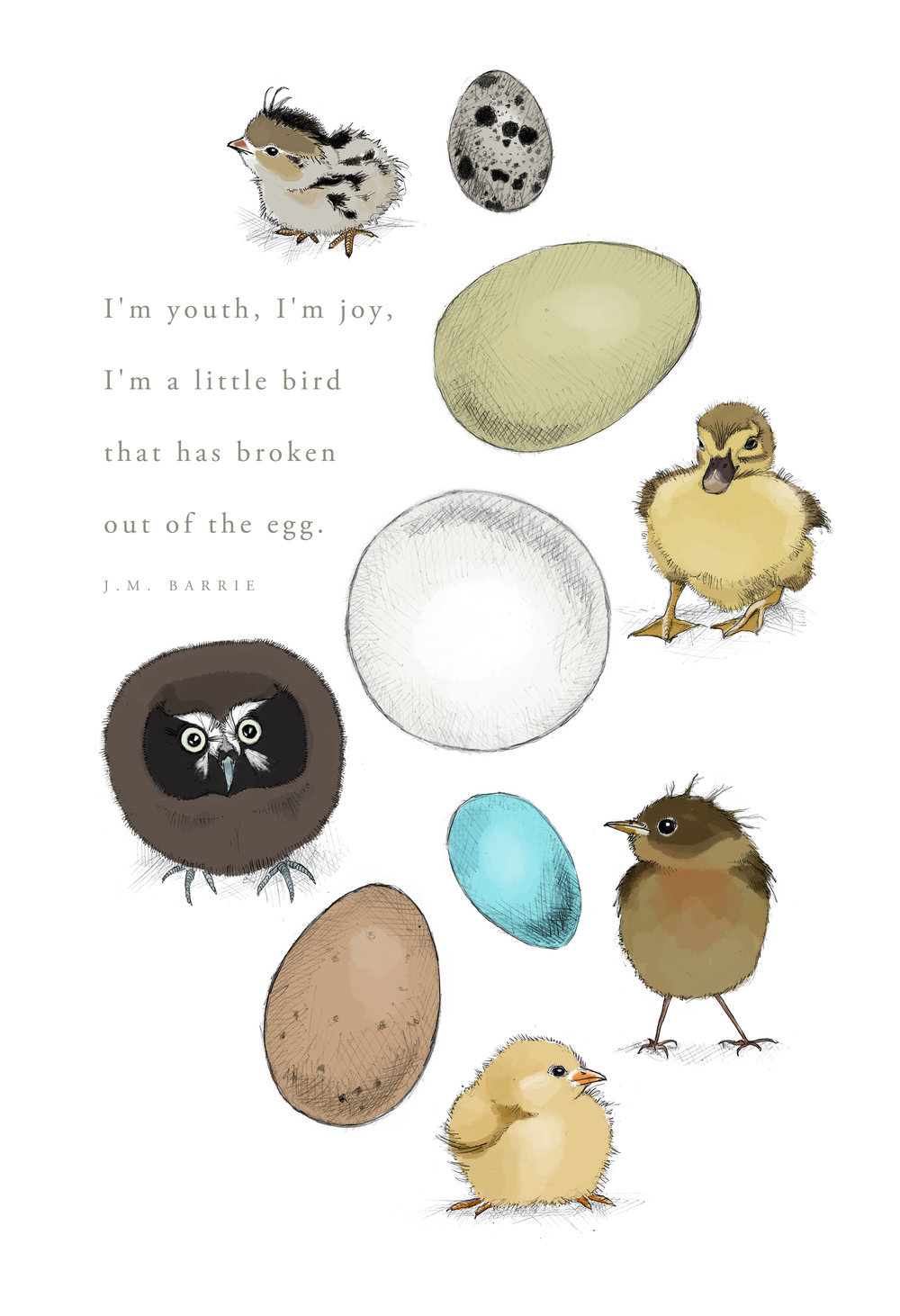 owl eggs are round!