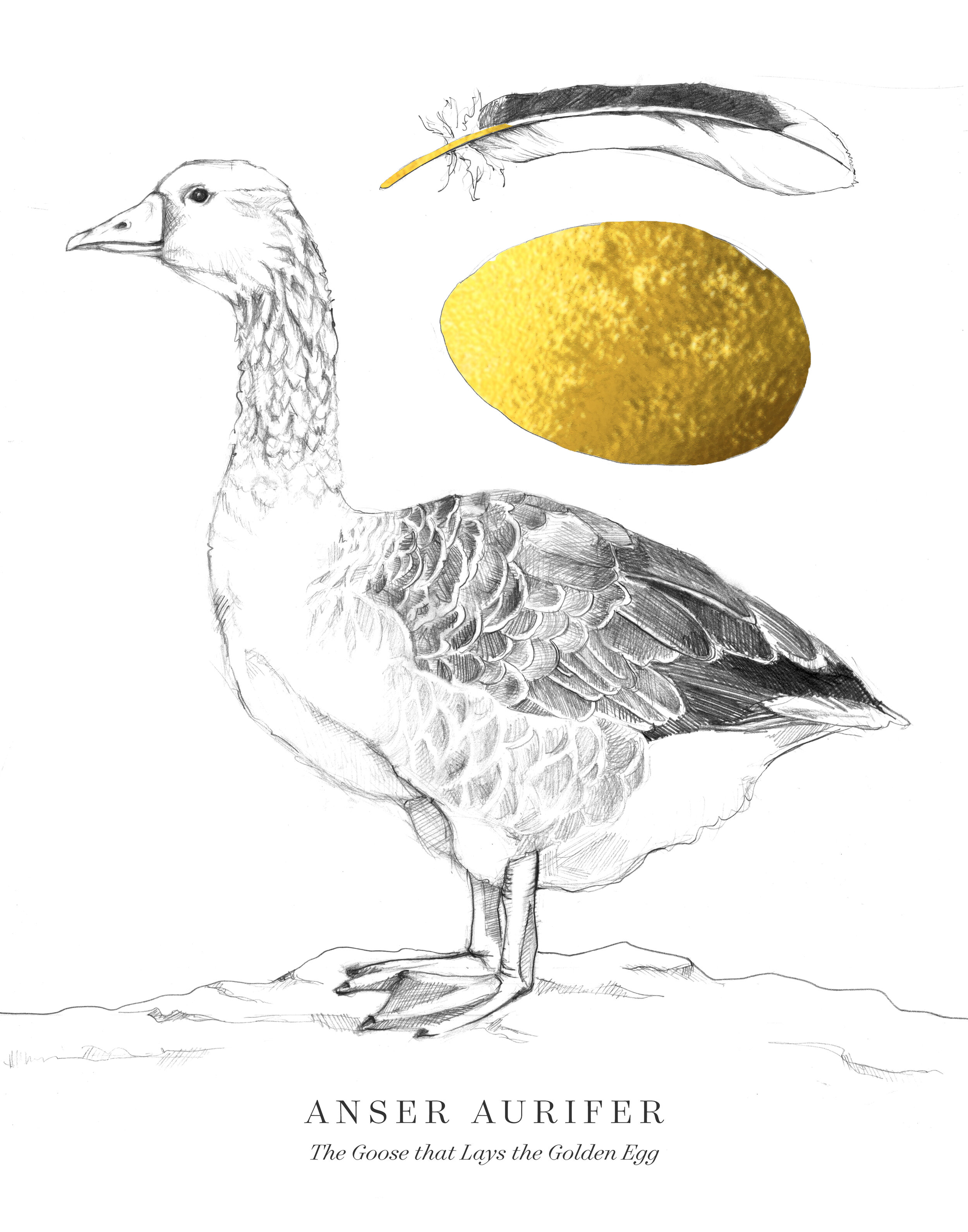 the goose that lays the golden egg