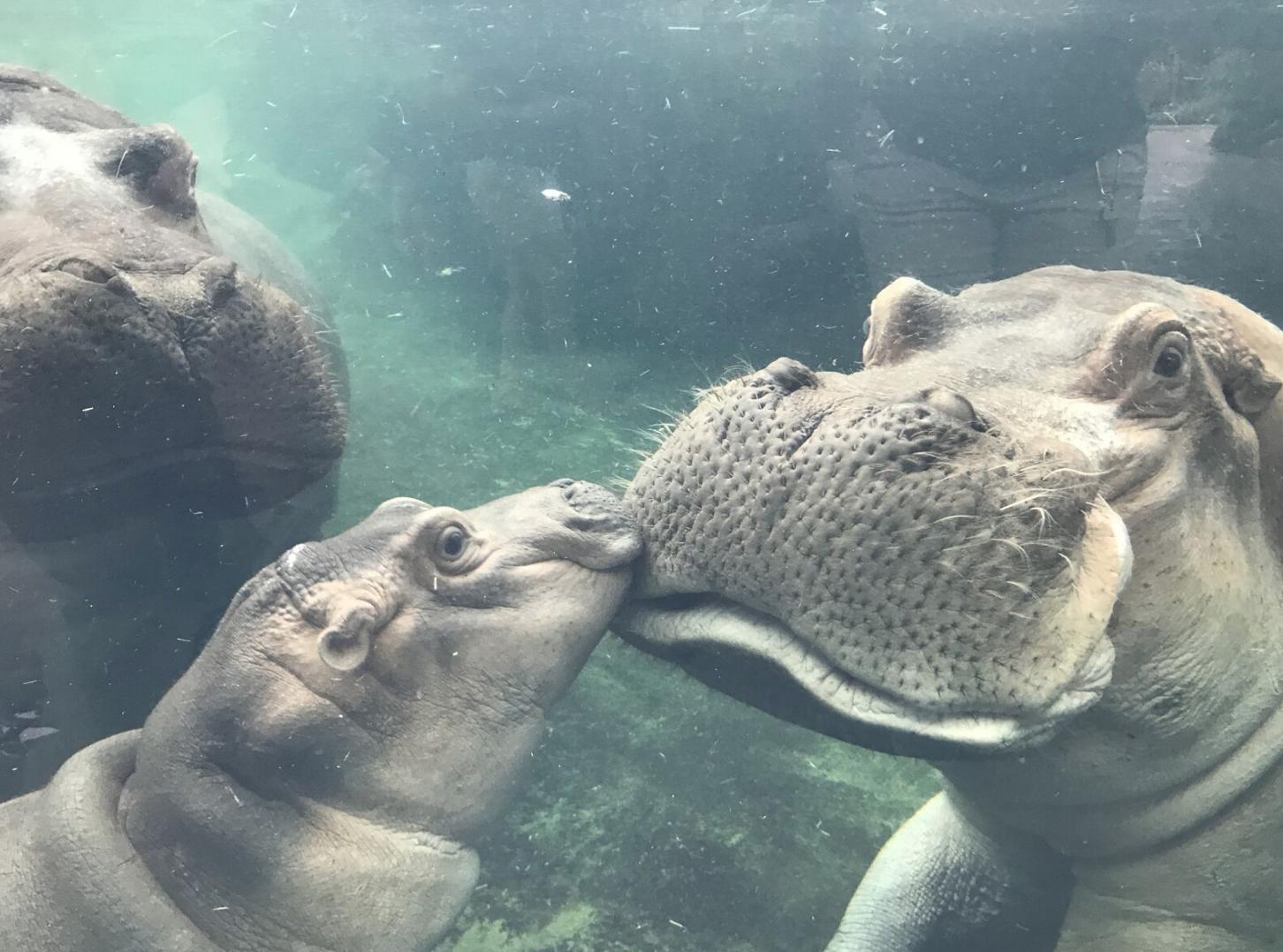Photo via the Cincinnati Zoo Blog