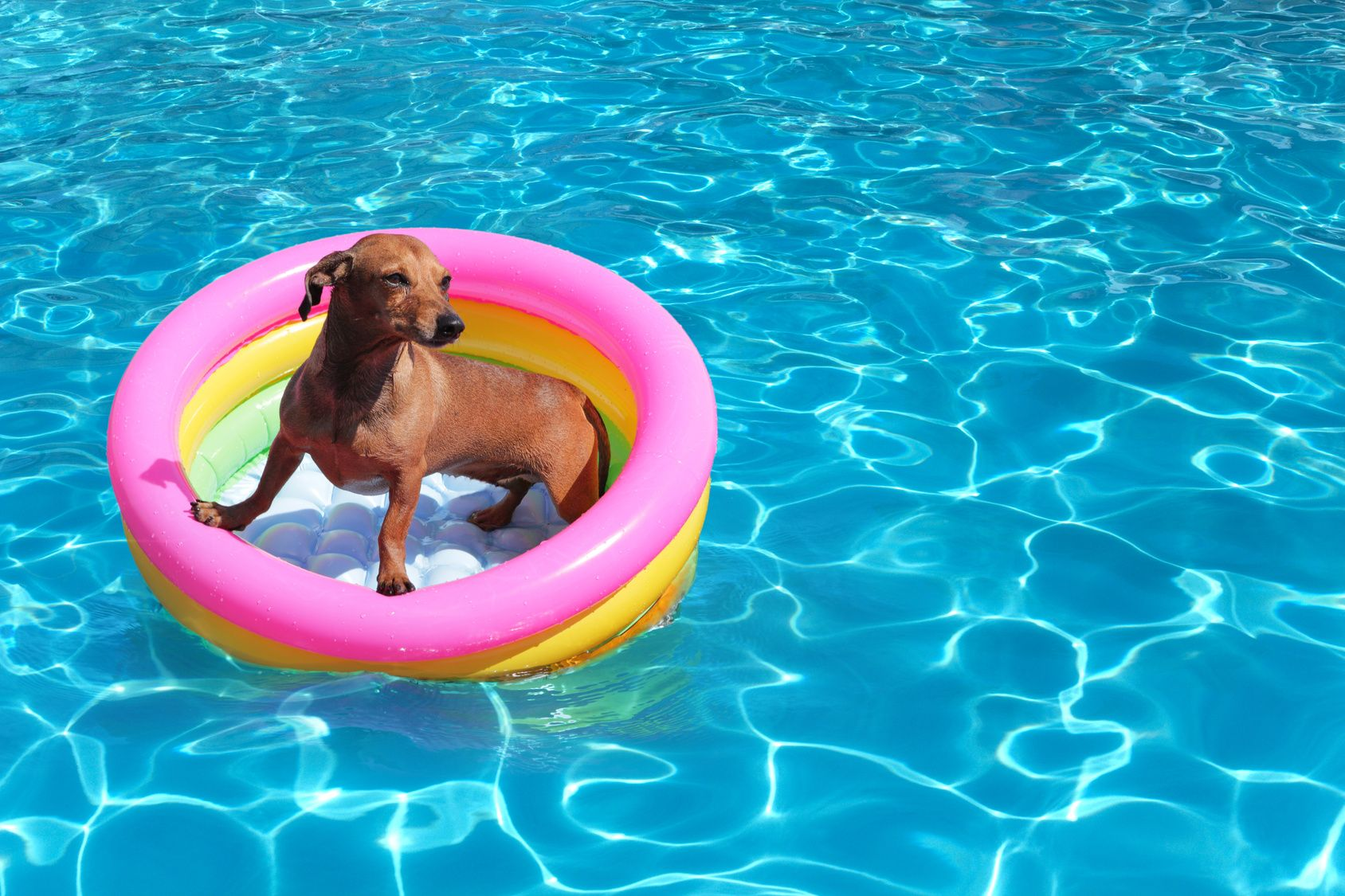 Swimming-Pool-Safety-for-Dogs-compressor.jpg