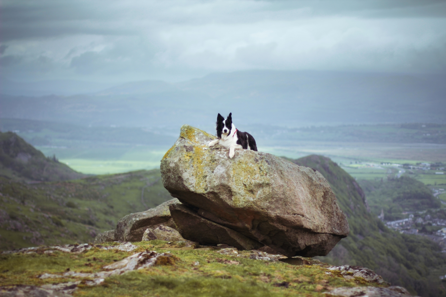 Samson, chilling atop a hill-top rock in Wales.
