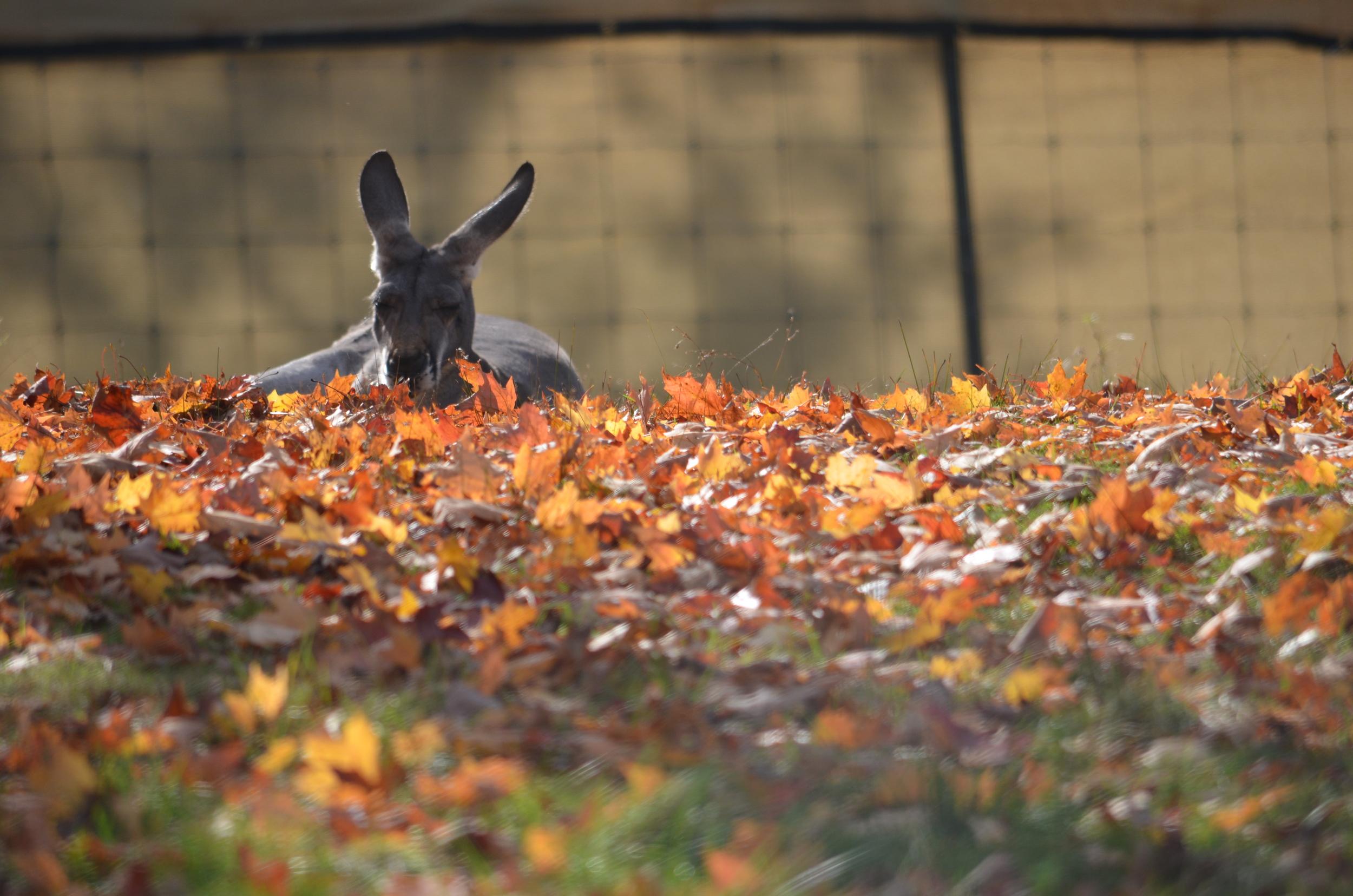 Franklin Park Zoo 2012 565.JPG