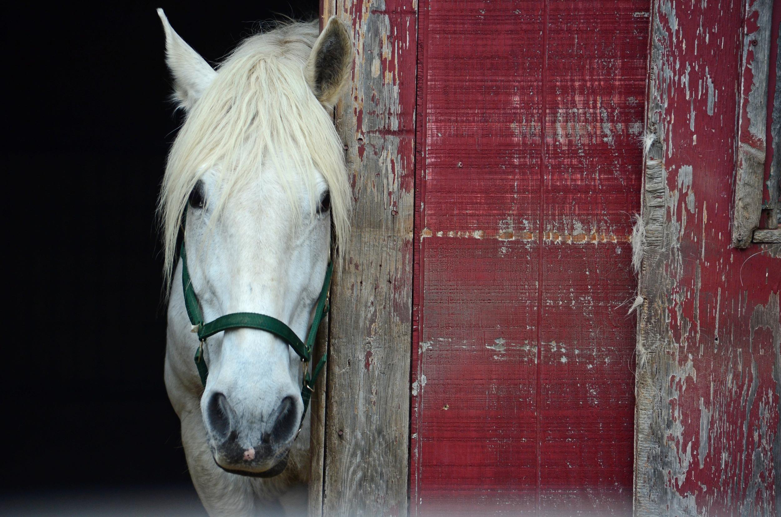 Horse--MSPCA   2013-05-23 191.jpg