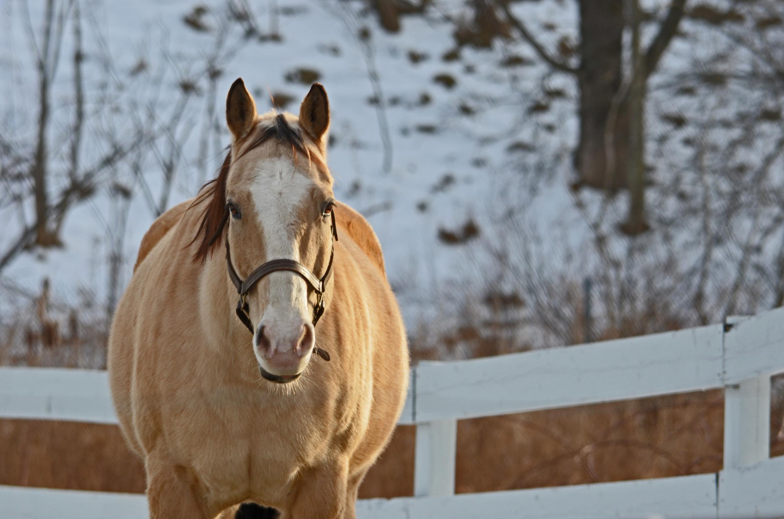 Horses 1-2013 155.jpg