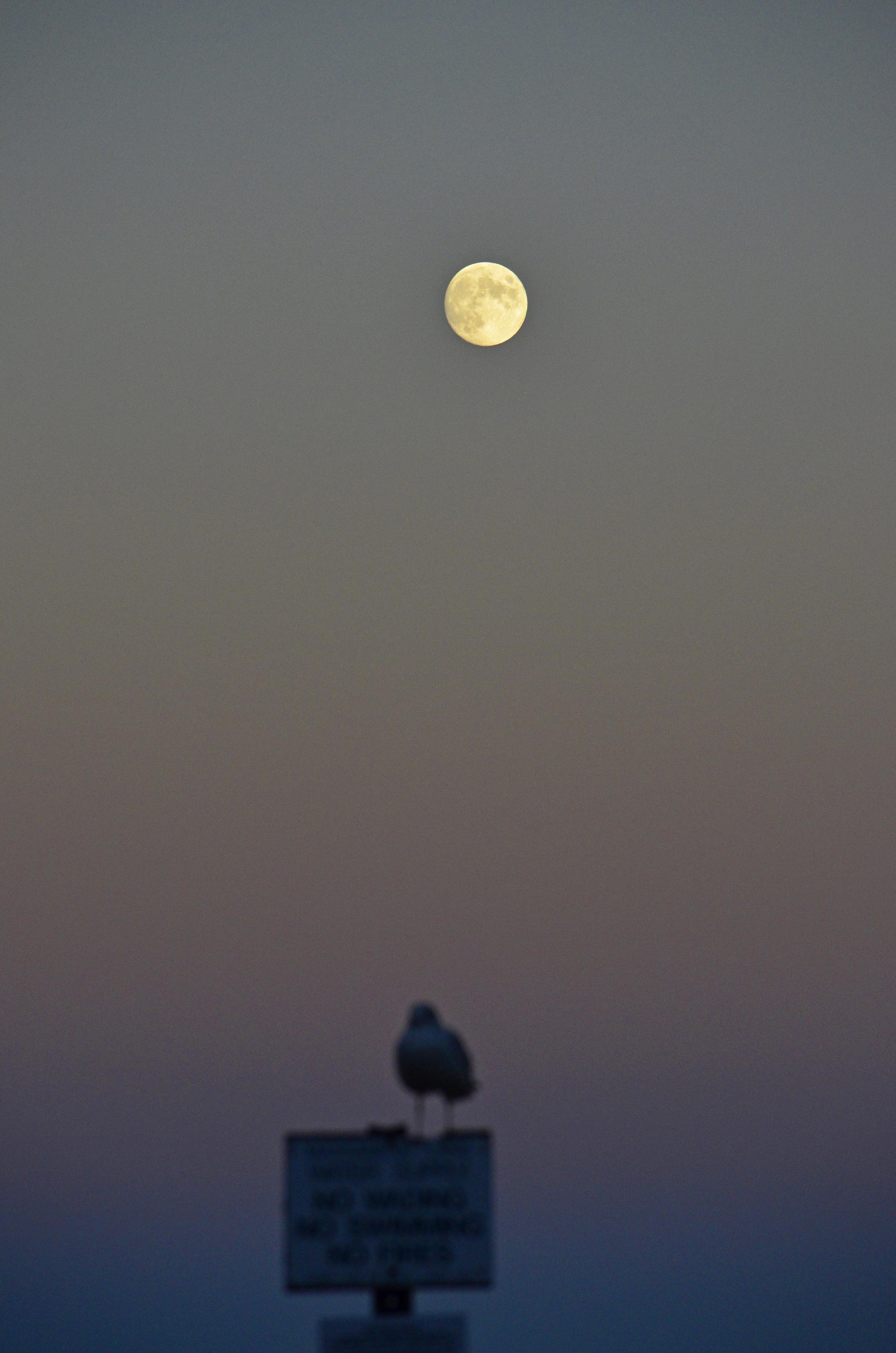 Skyla, Massabesic, Moon 2013-10-17 429.jpg