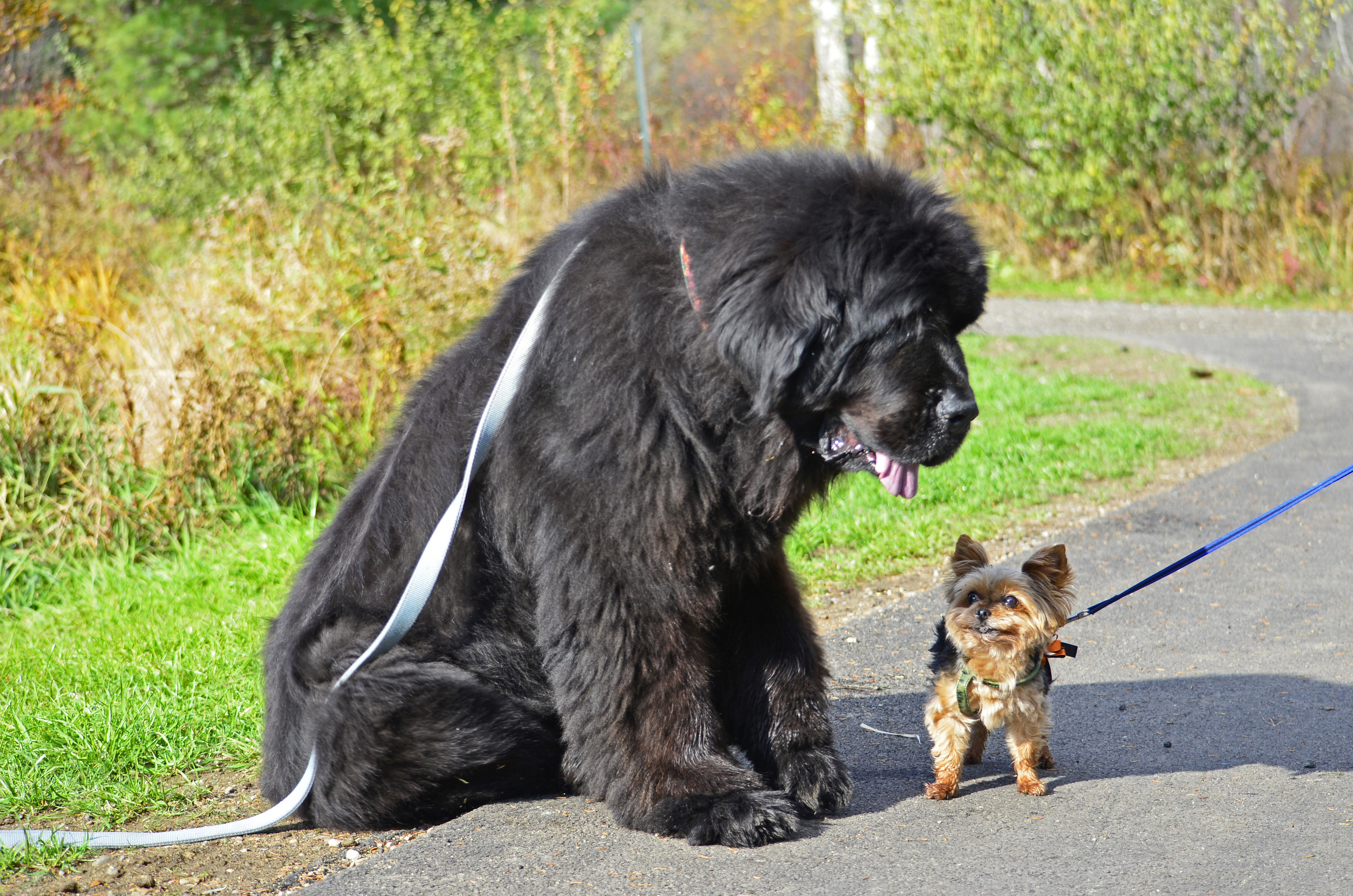 Skyla meets a friend.