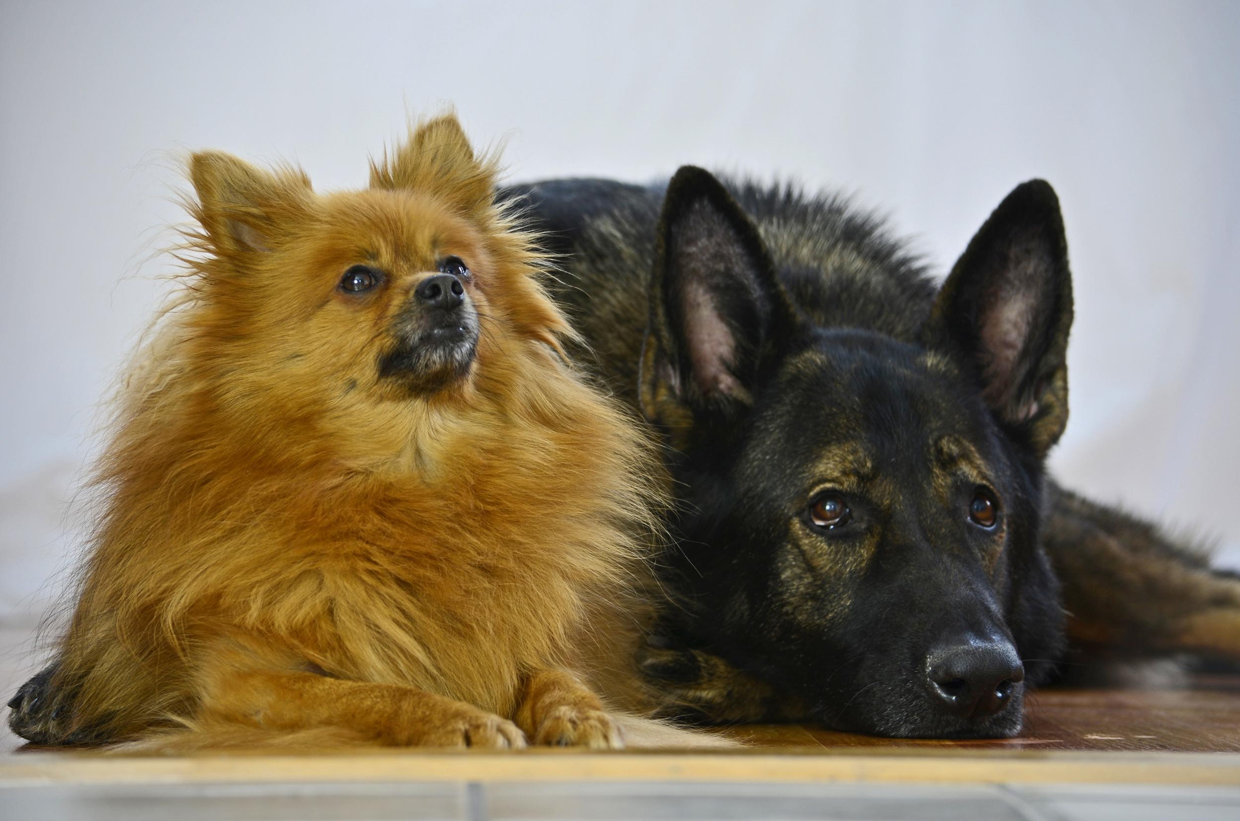 Dog portraits 2014-01-06 079.jpg