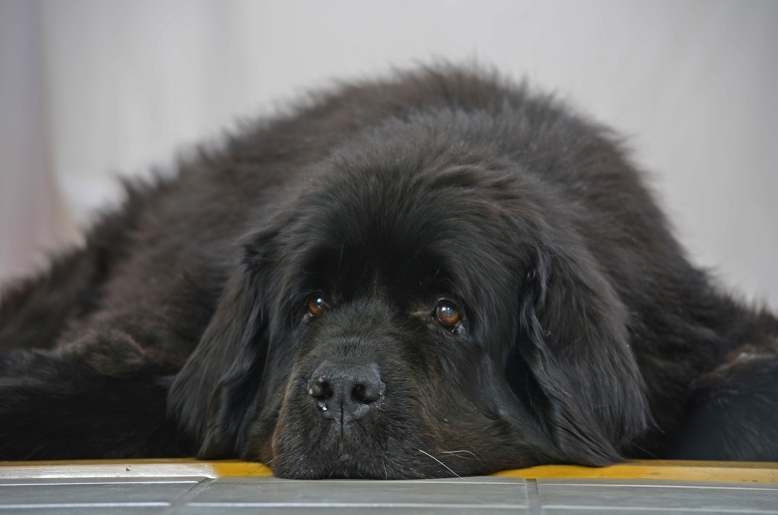 Dog portraits 2014-01-06 094.jpg