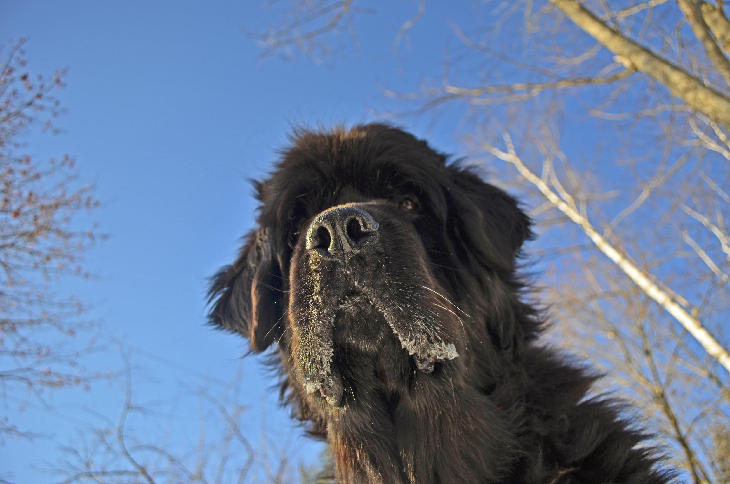 Skyla looking up 2014-01-08 012.jpg