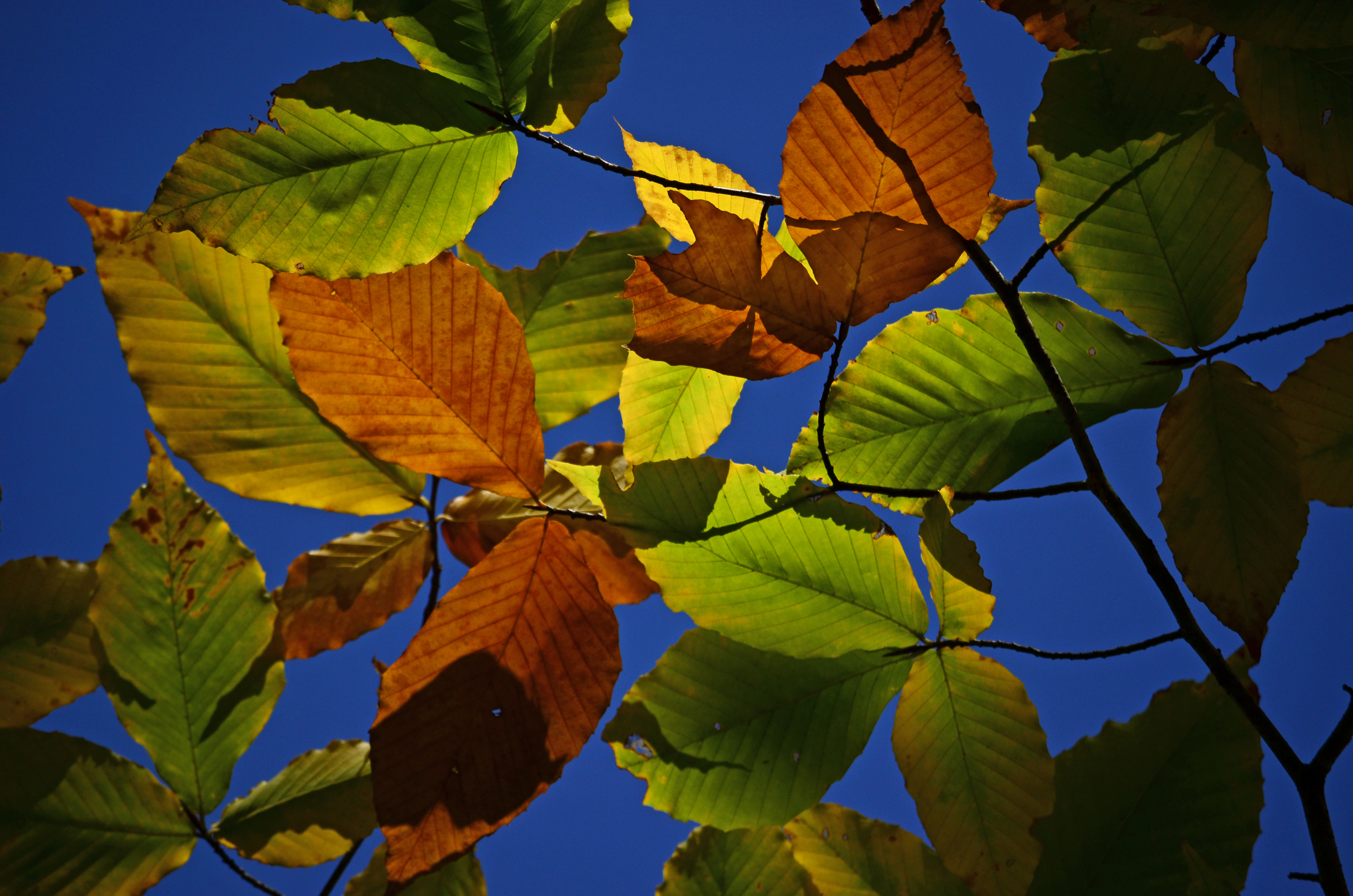 Audubon NH 2013-10-18 096.jpg