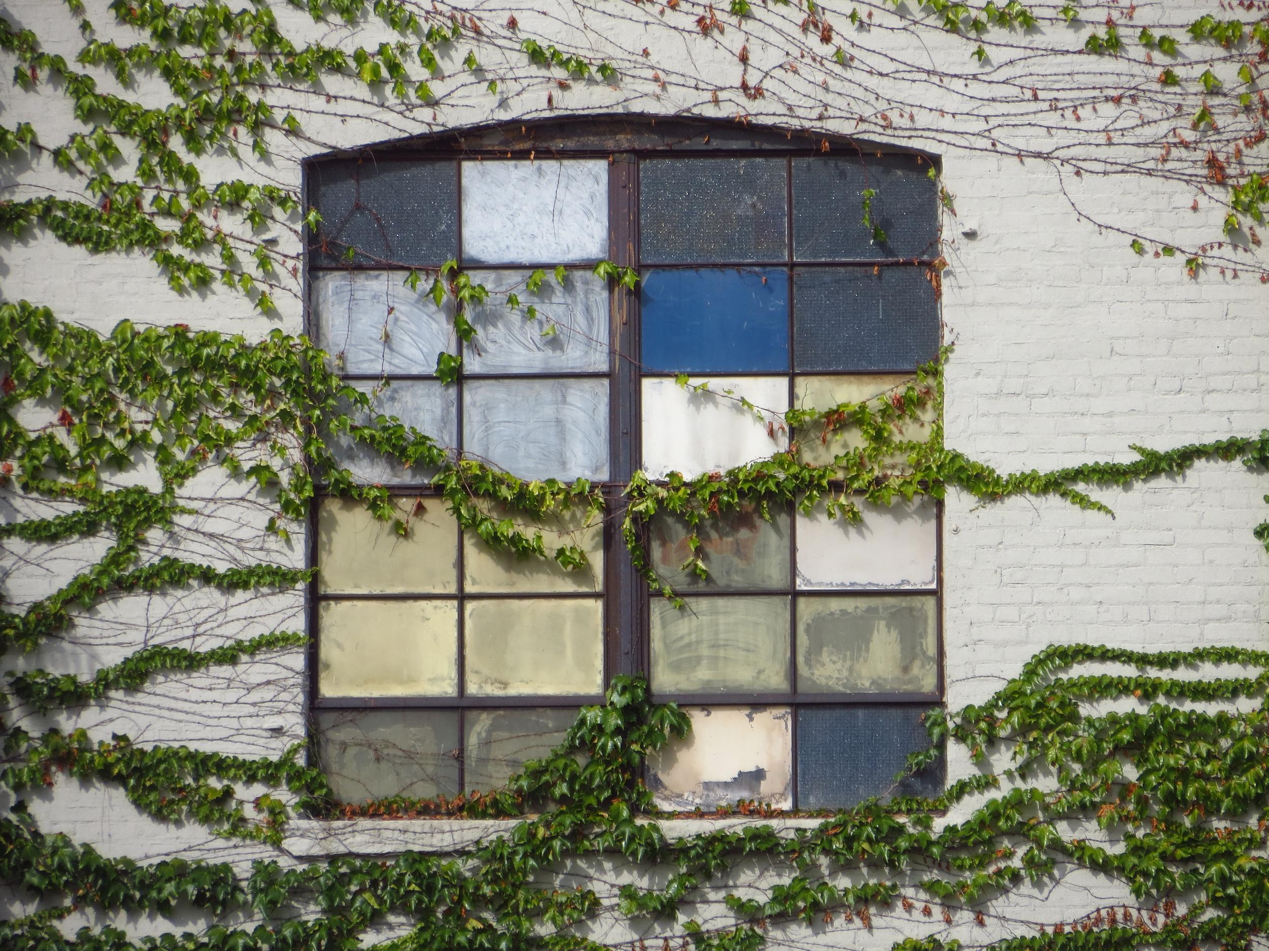 Vine-covered window
