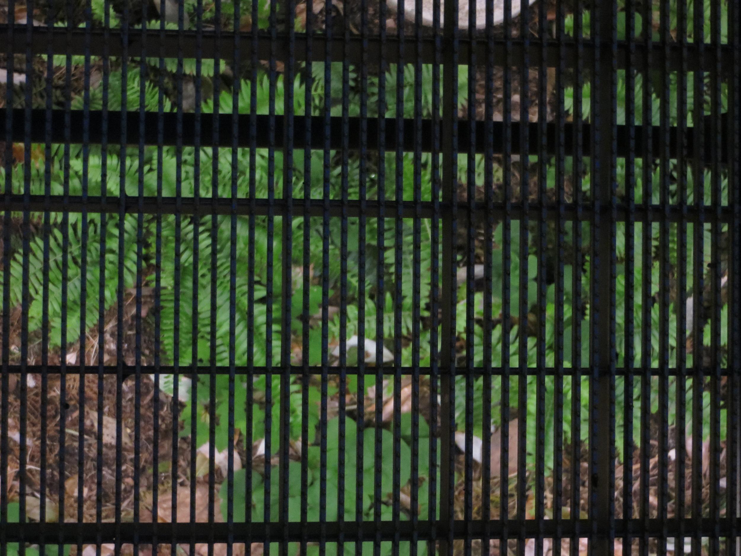 Ferns underfoot