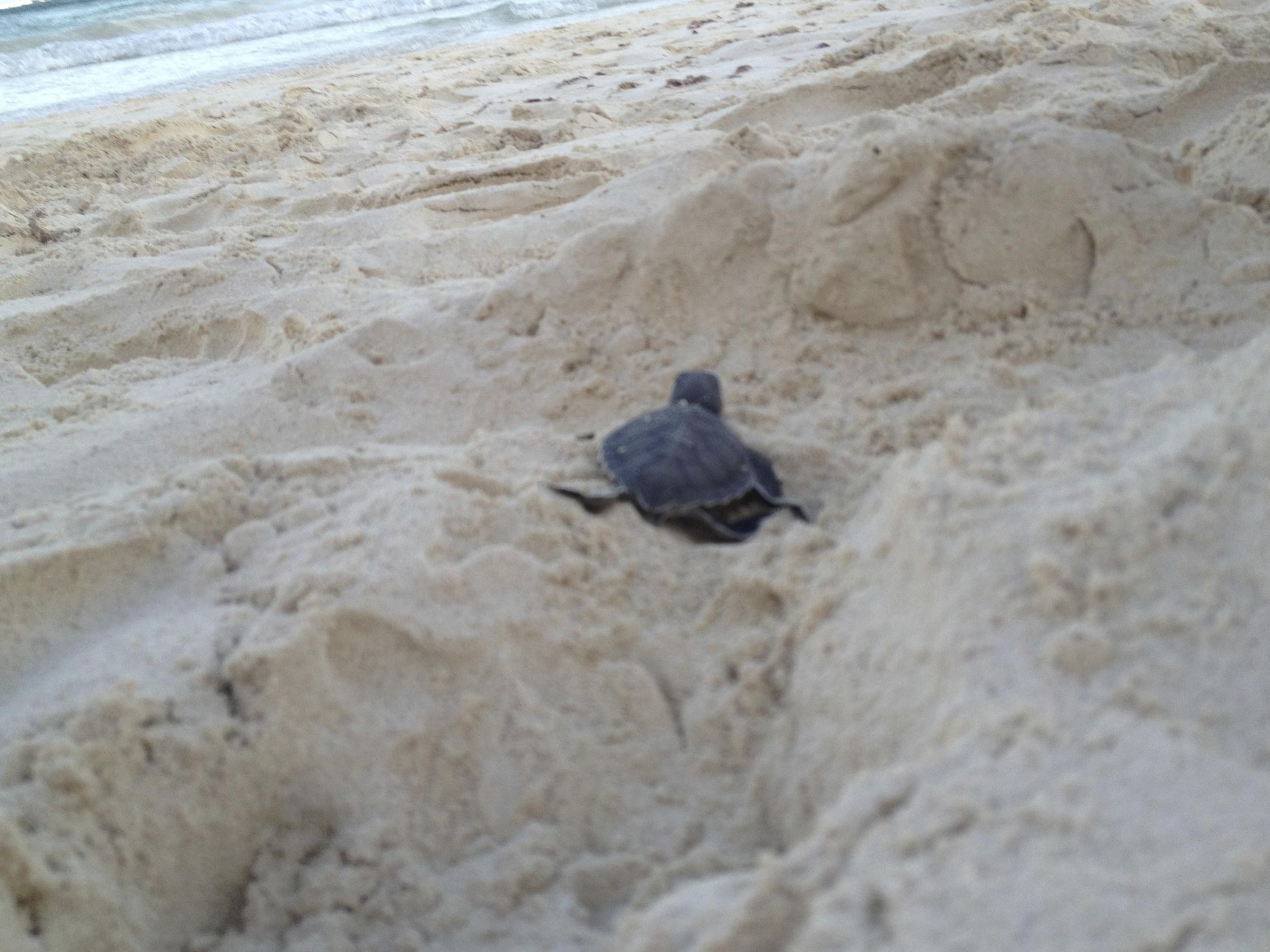 Sanara Tulum - Turtles