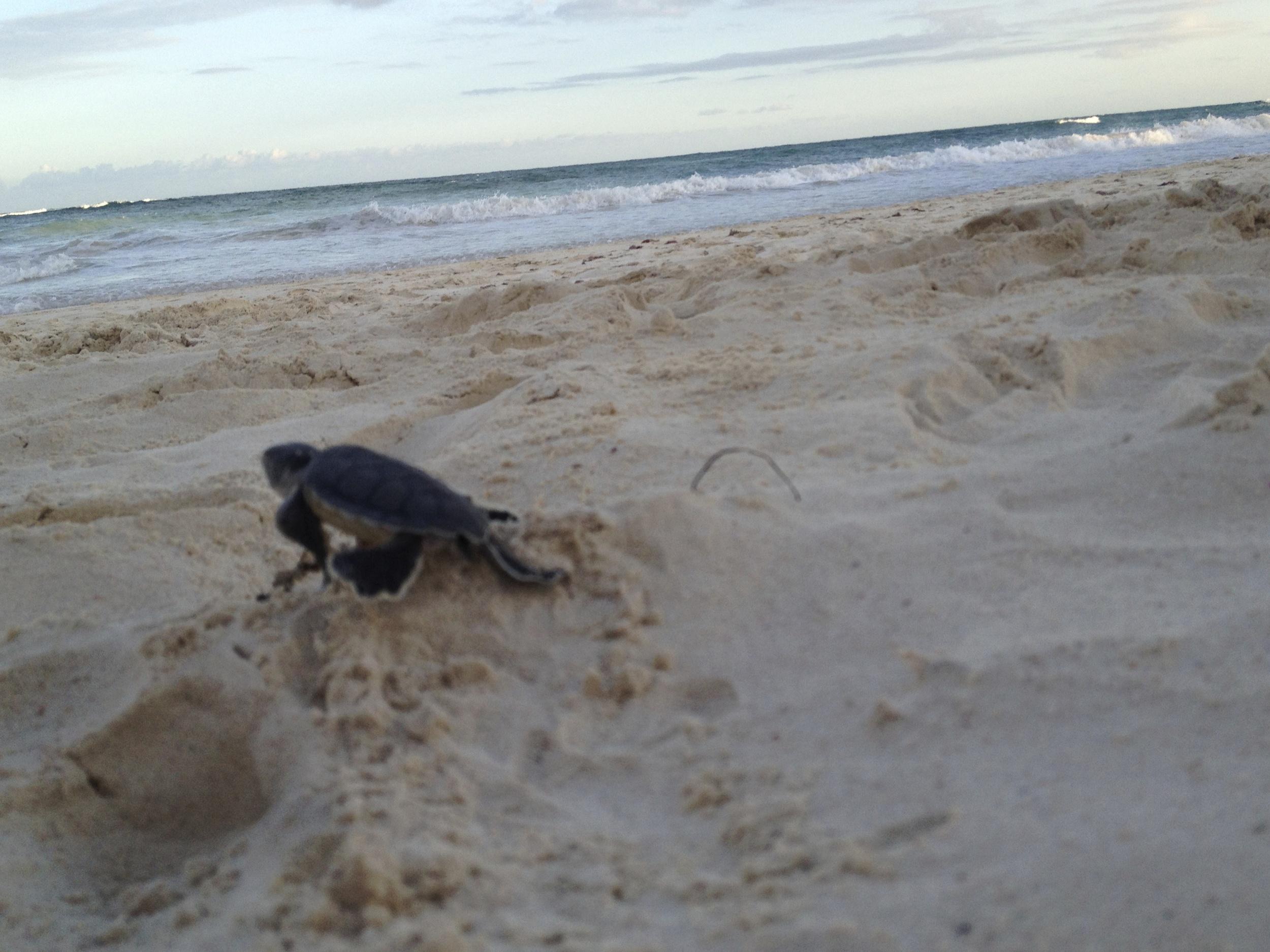 Sanara Tulum -Turtles