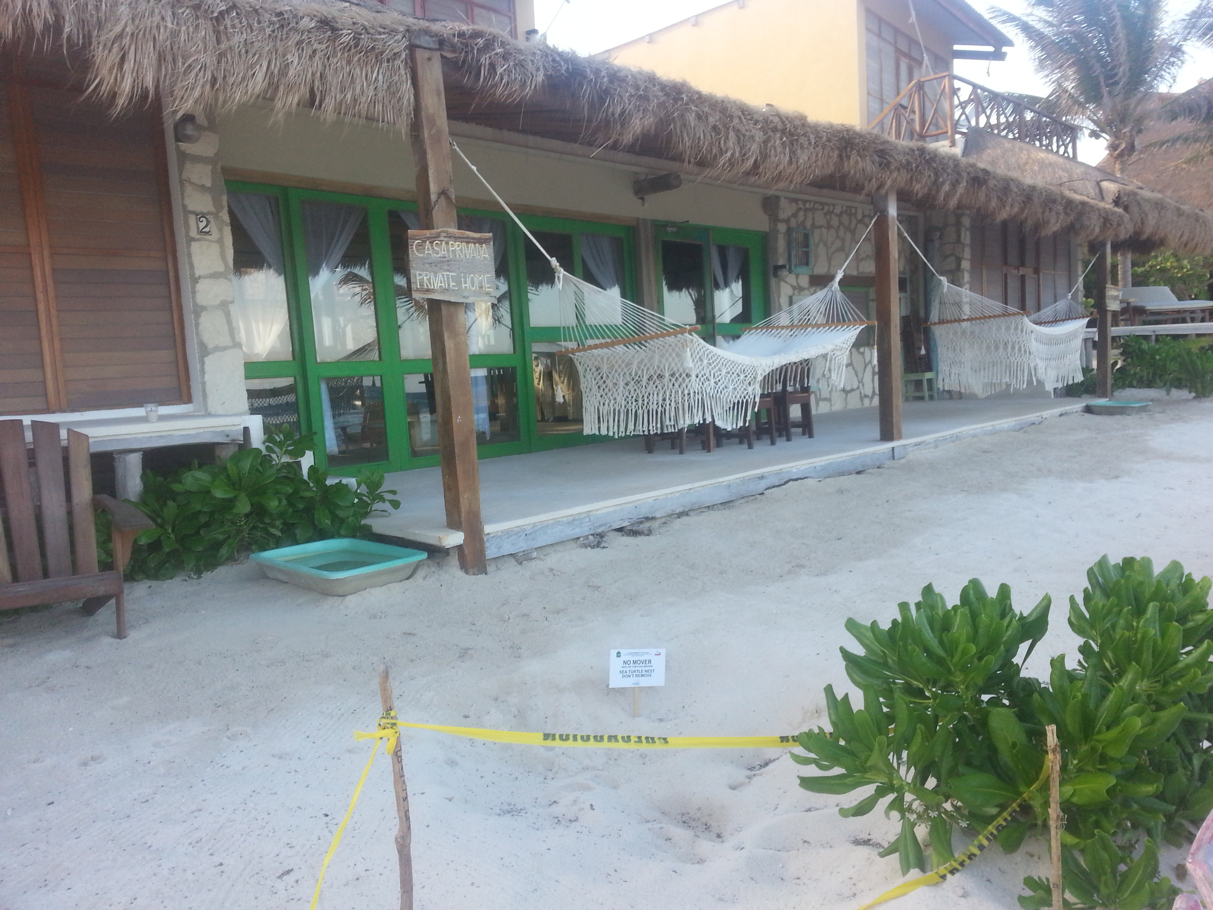 Tulum Turtles at the El Pez Beach Villa
