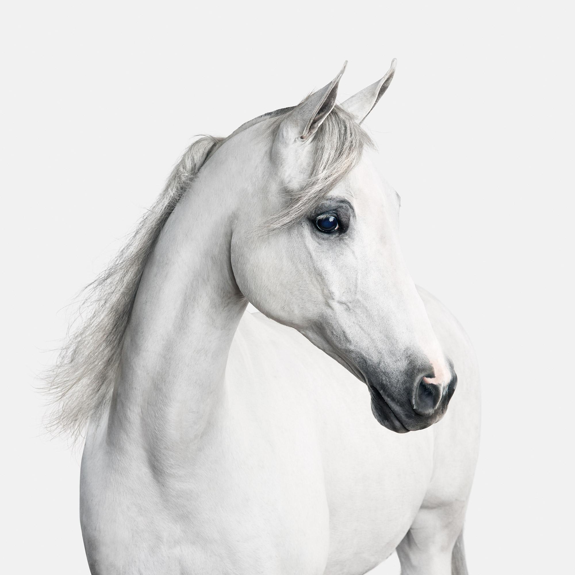 white-arabian-cracker-5669-1.jpg