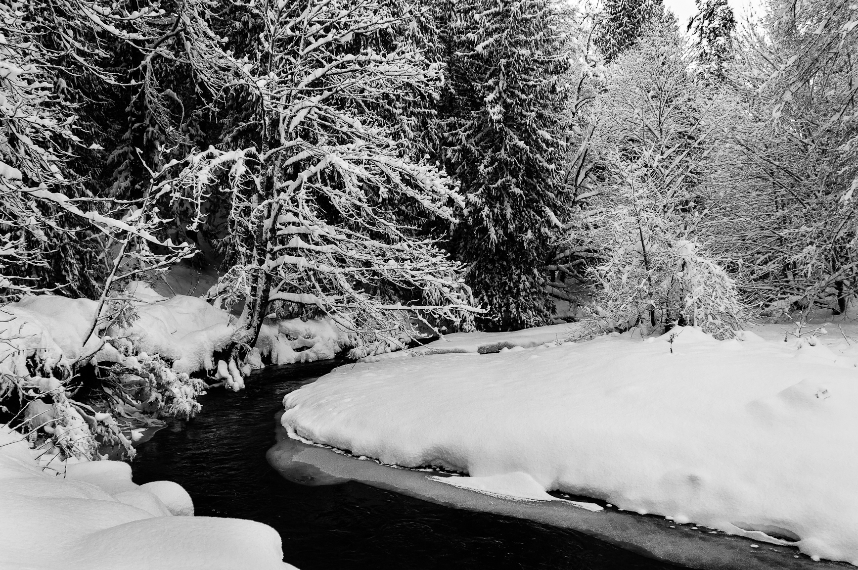 snowyday2 021.jpg
