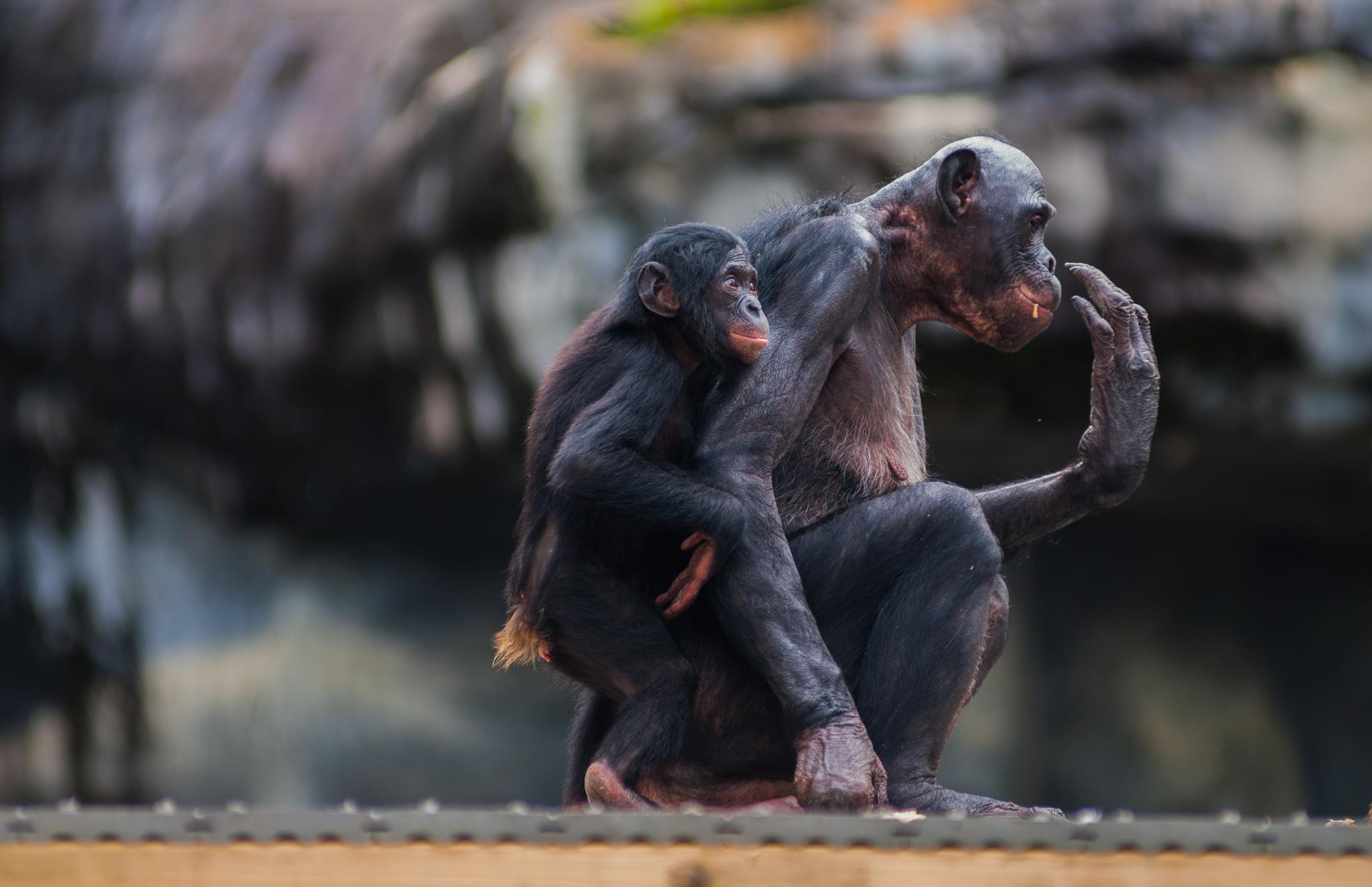 Jacksonville Zoo-7948.jpg