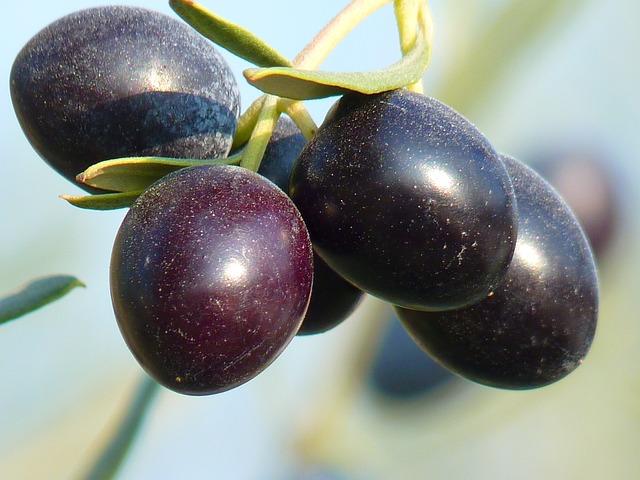 brown olives 15016_640.jpg