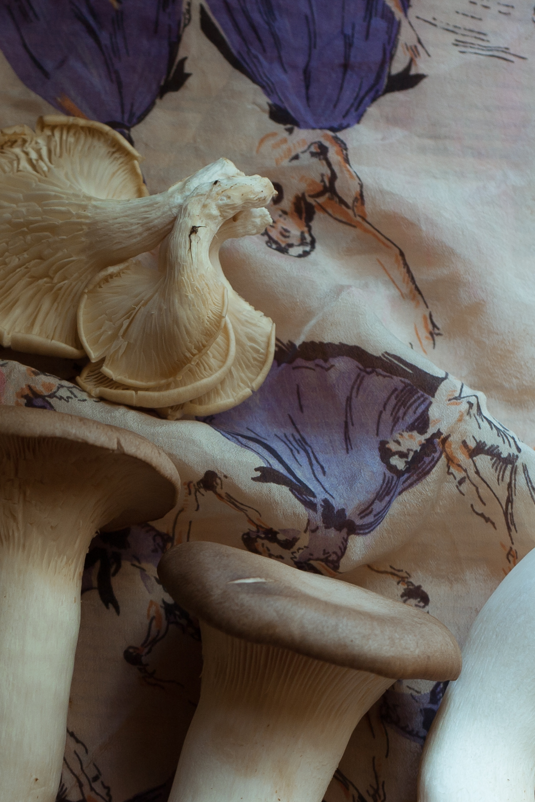 mushroom-1.jpg