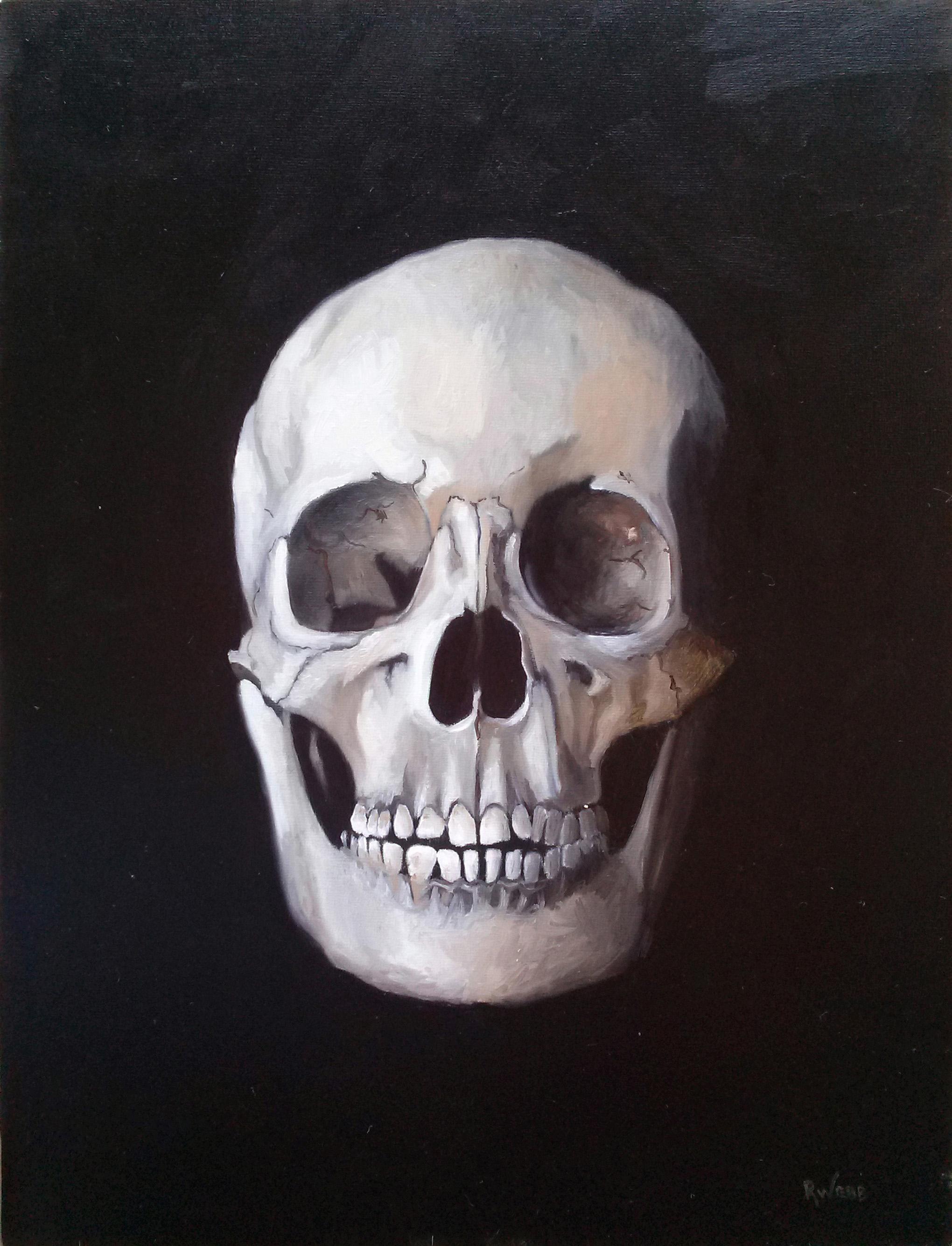 Skull Study - Oil on Panel - 9x12