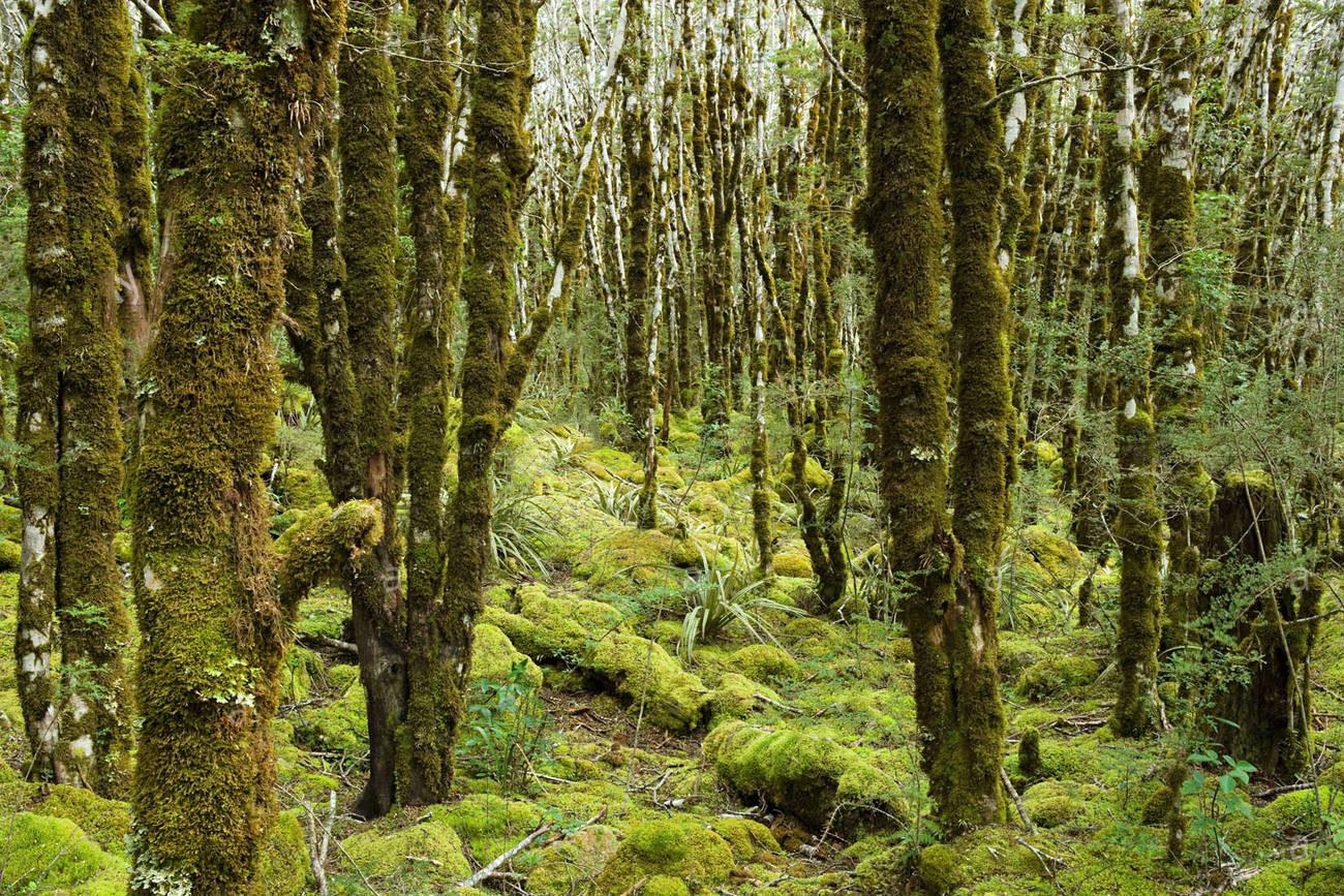 rain-forest-on-arthurs-pass-BK7ED5.jpg