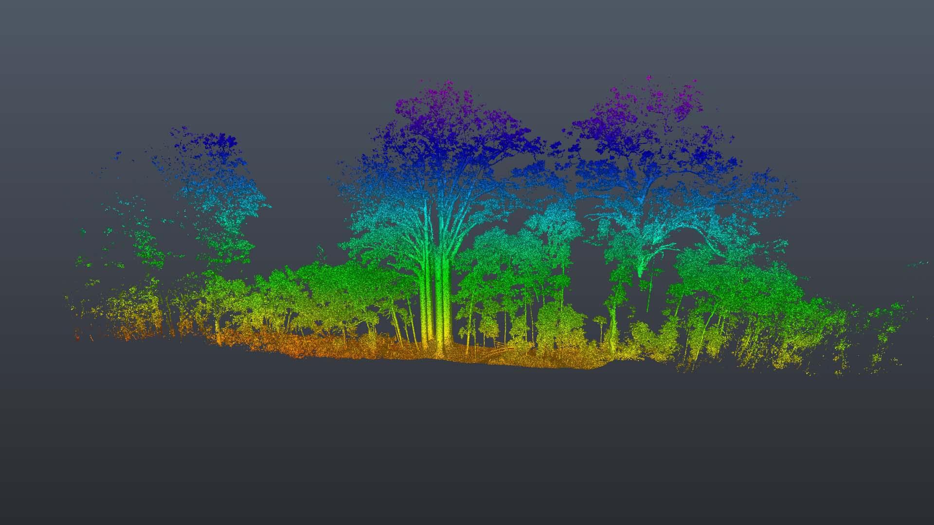 Kauri_Elevation 4.jpg