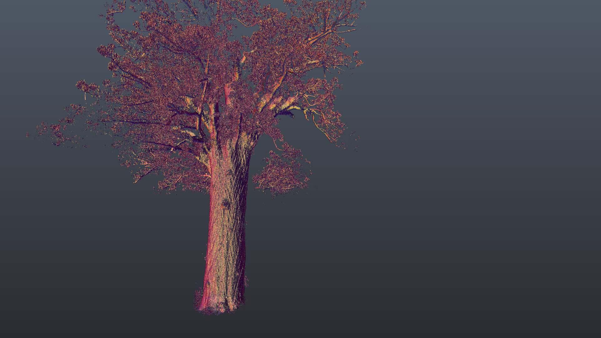 Kauri_Rotate 2.jpg
