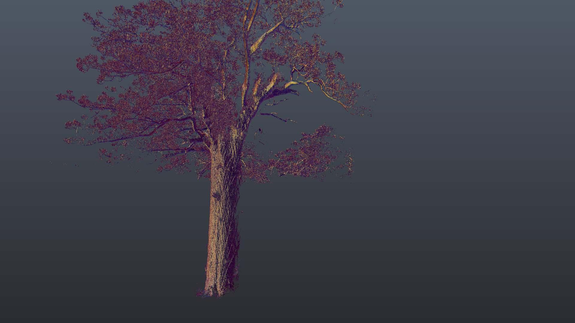 Kauri_Rotate 3.jpg