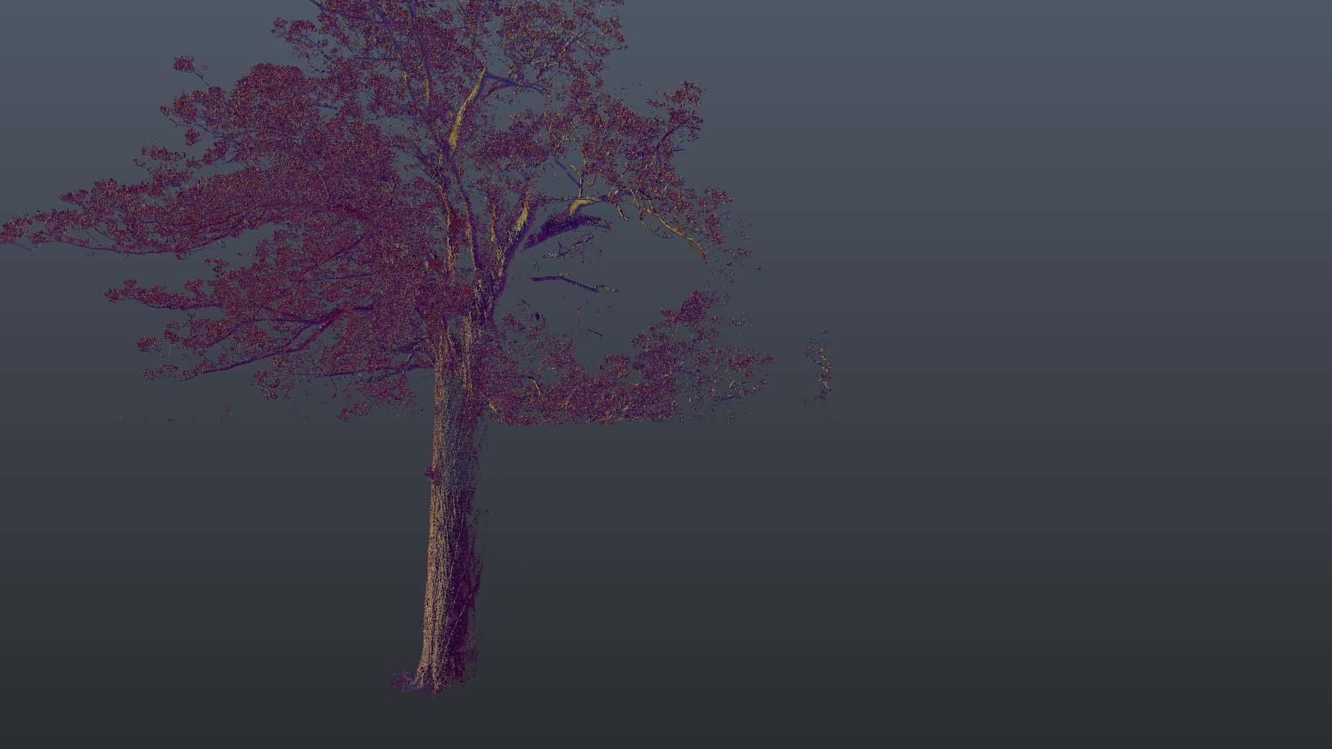 Kauri_Rotate 4.jpg