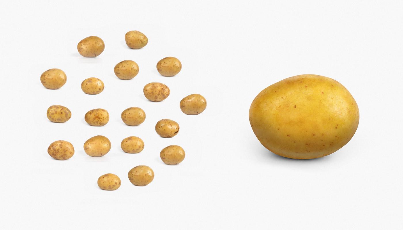 Фотосъемка и поиск формы картофеля