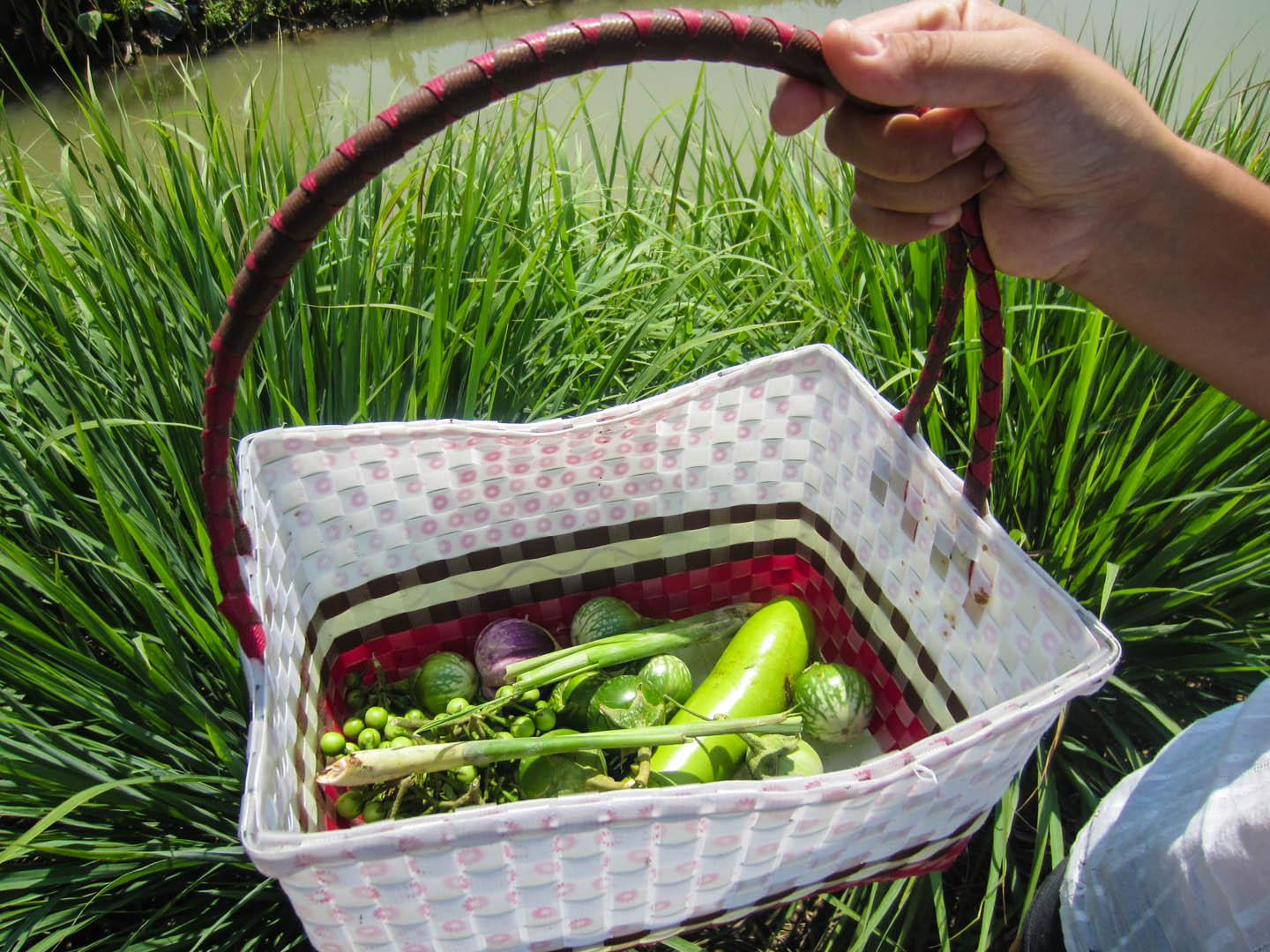 Ingredients collected from the local garden at the cooking school.