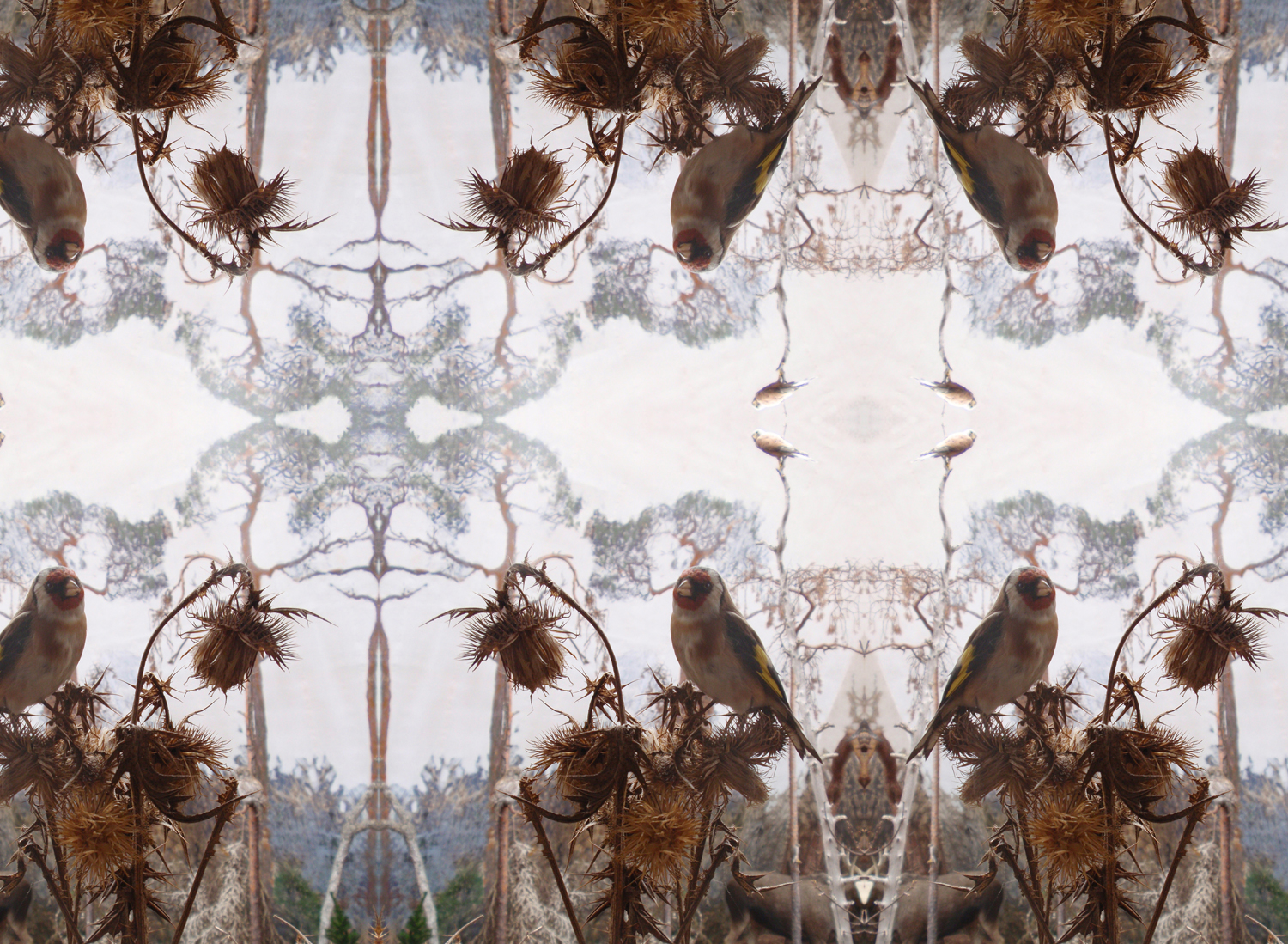 'Untitled' (2009) Digital image, detail from large scale pattern design.