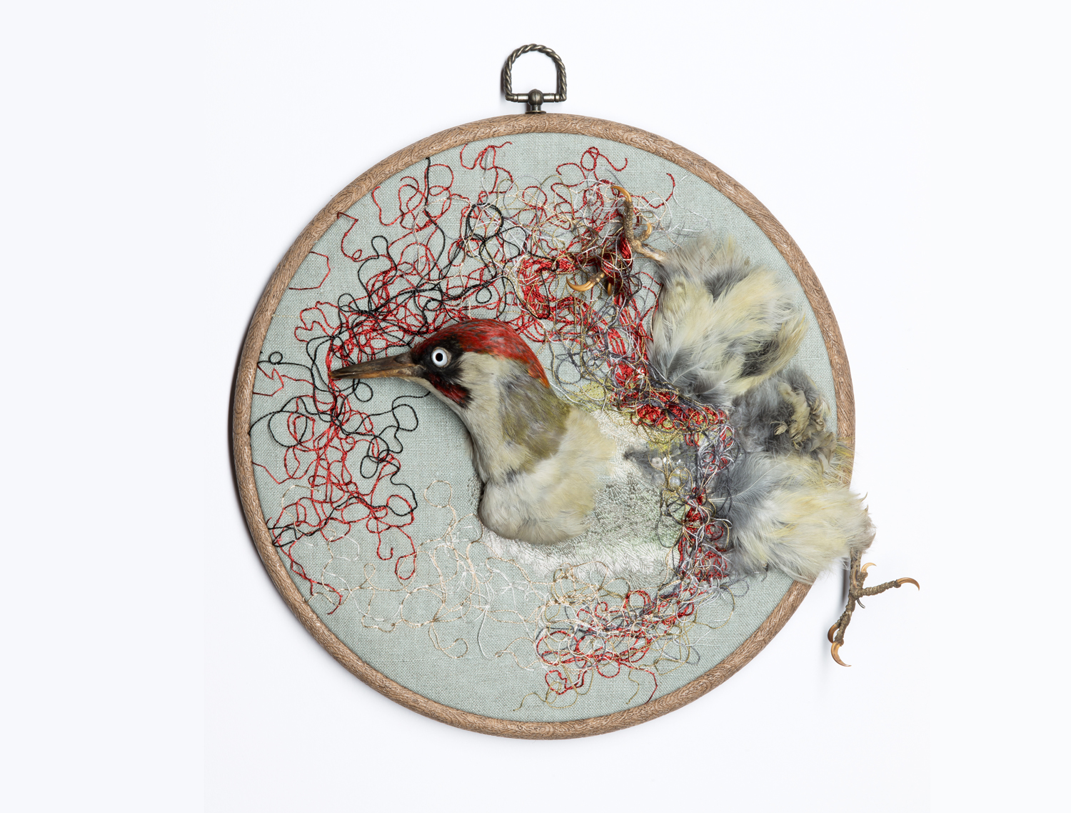 'Unfurl' (2013) Hand embroidery and vintage taxidermy on linen, readymade embroidery hoop, 28cm diameter.