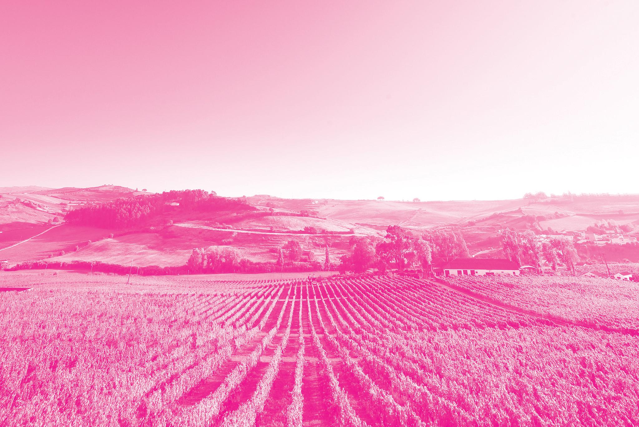 Cidade Europeia do Vinho 2018 - Torres Vedras e Alenquer
